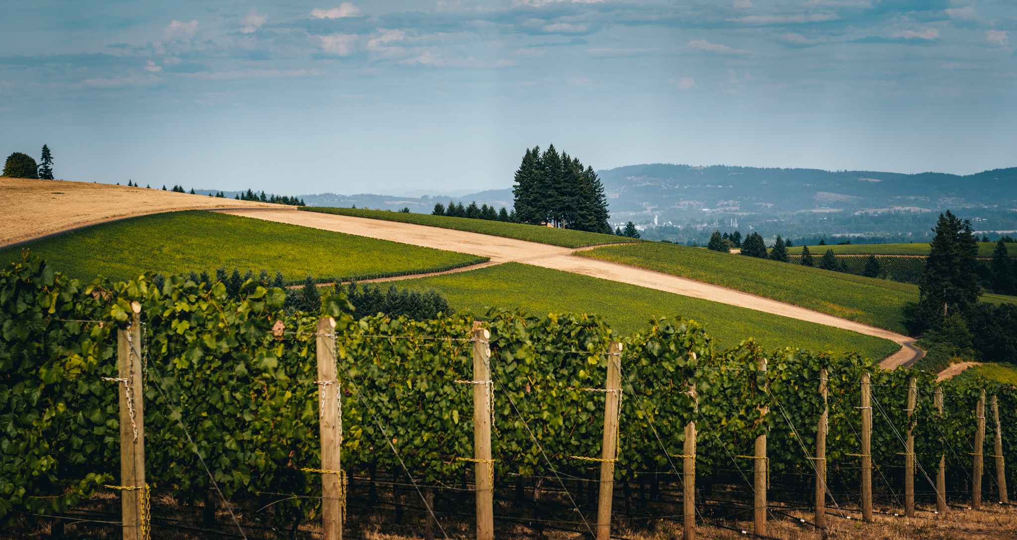 US : Oregon : Vineyards in the Dundee Hills