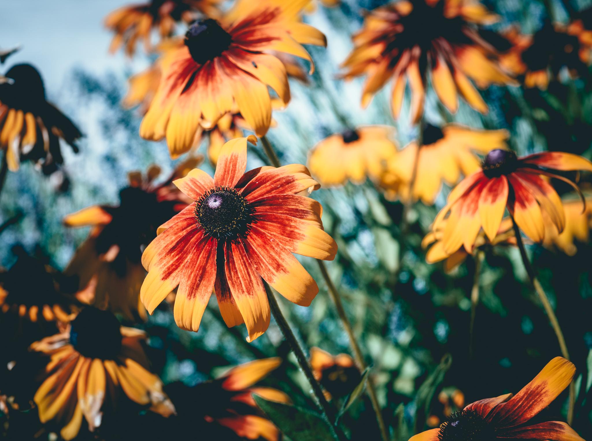 US : Oregon : Penner-Ash's garden