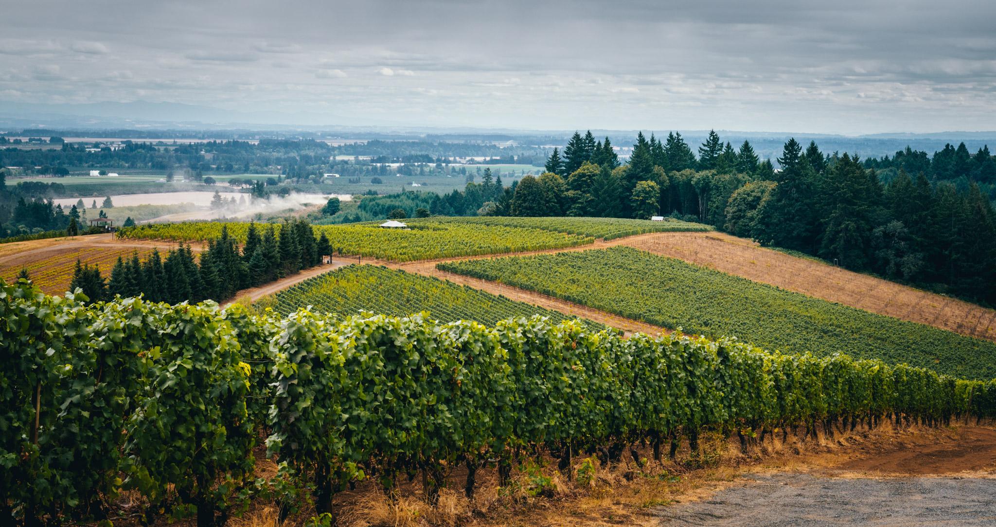 US : Oregon : Winderlea's vines in the Dundee Hills AVA