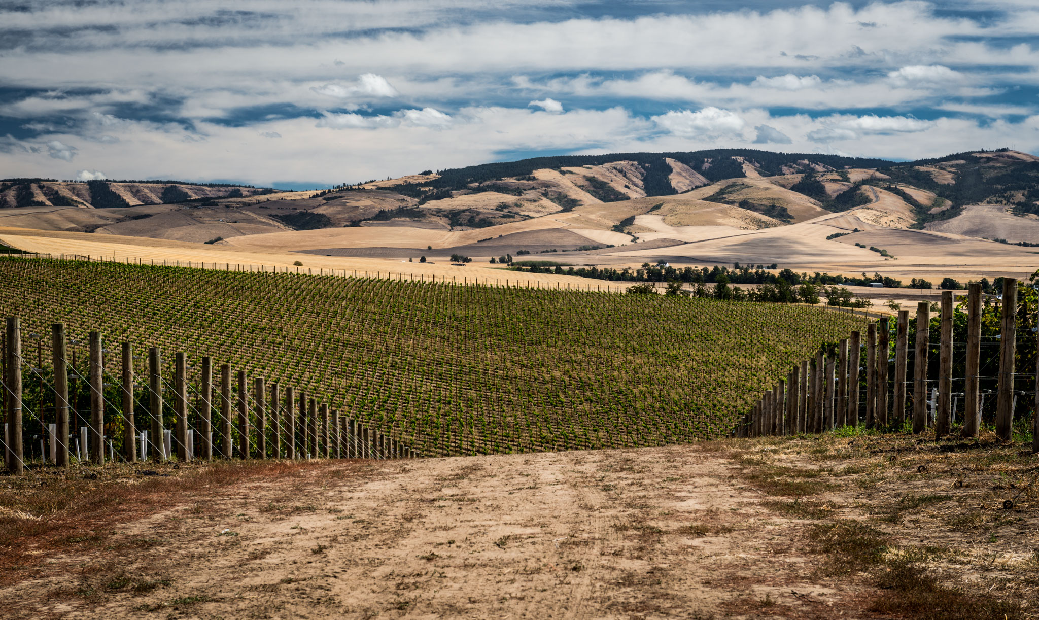 US : Washington : Blue Mountain Vineyard, Walla Walla