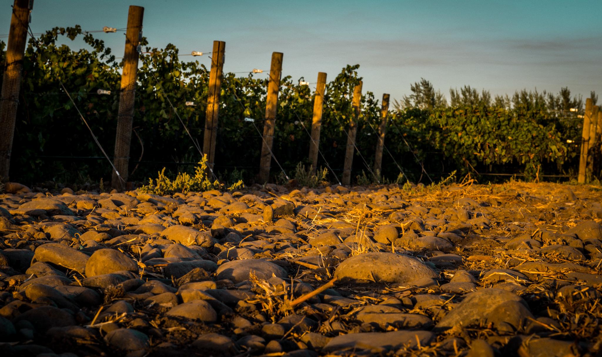 US : Washington : The Rocks AVA in Milton-Freewater