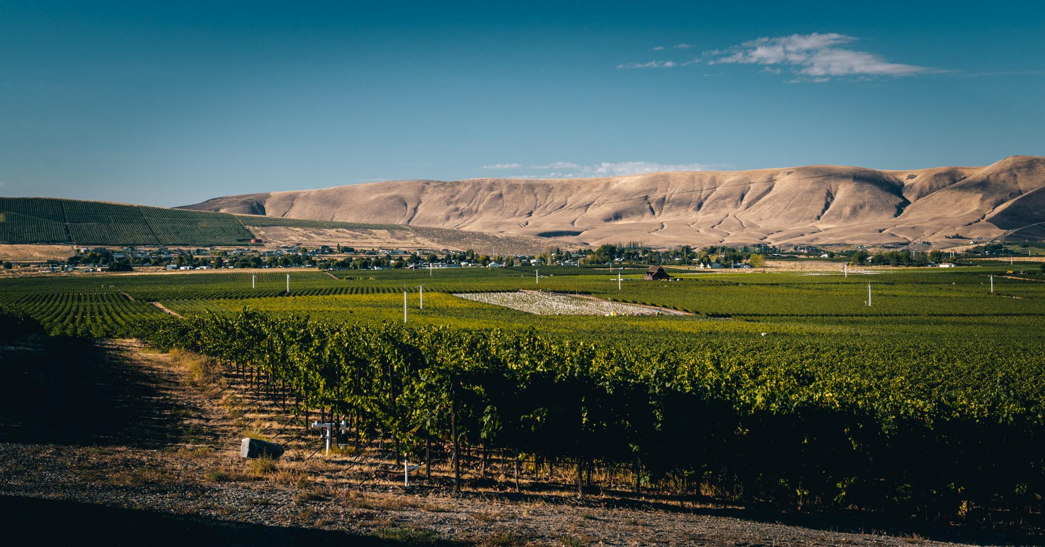 US : Washington : Ciel du Cheval vineyard in the Red Mountain AVA