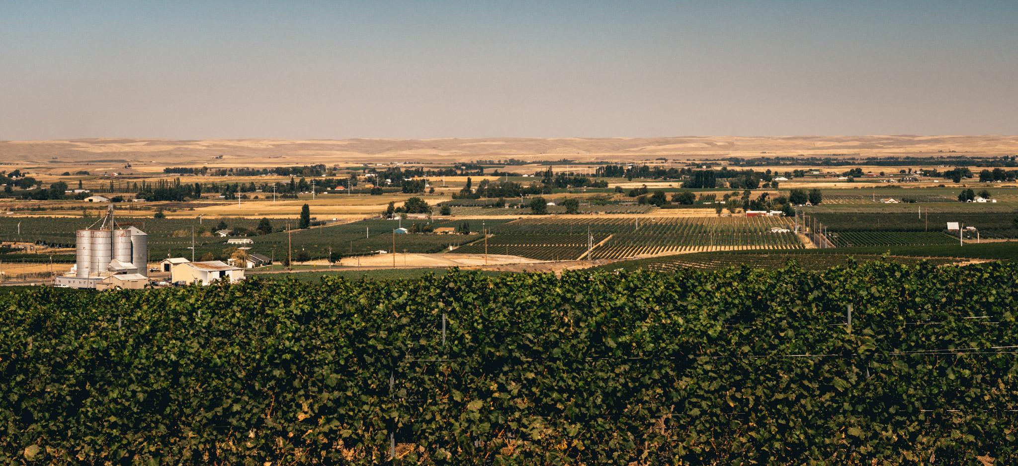 US : Washington : Vineyards in the Seven Hills area of Walla Walla