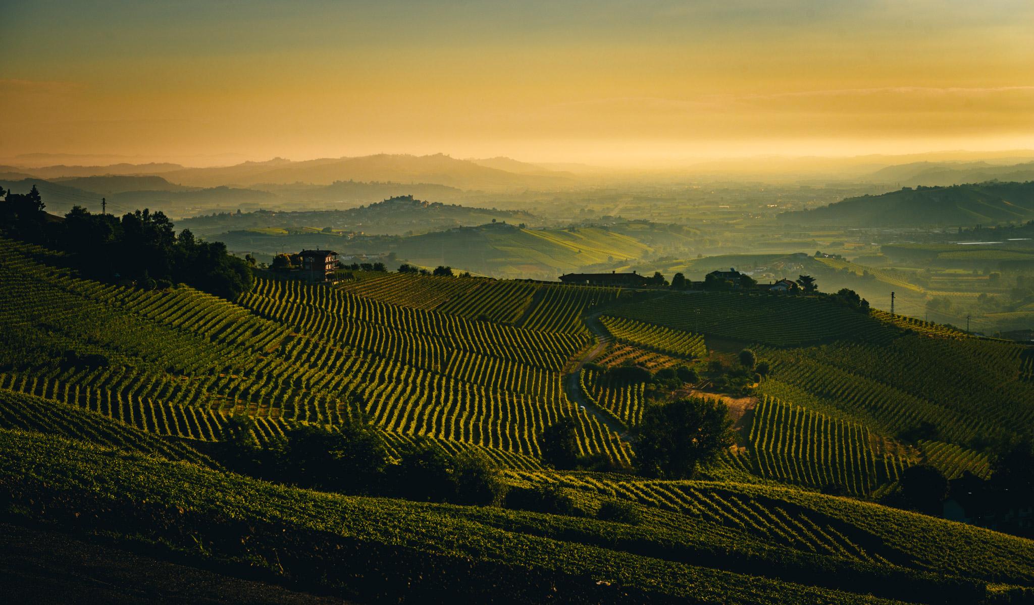 Italy : Piedmont : Sunrise over Barolo