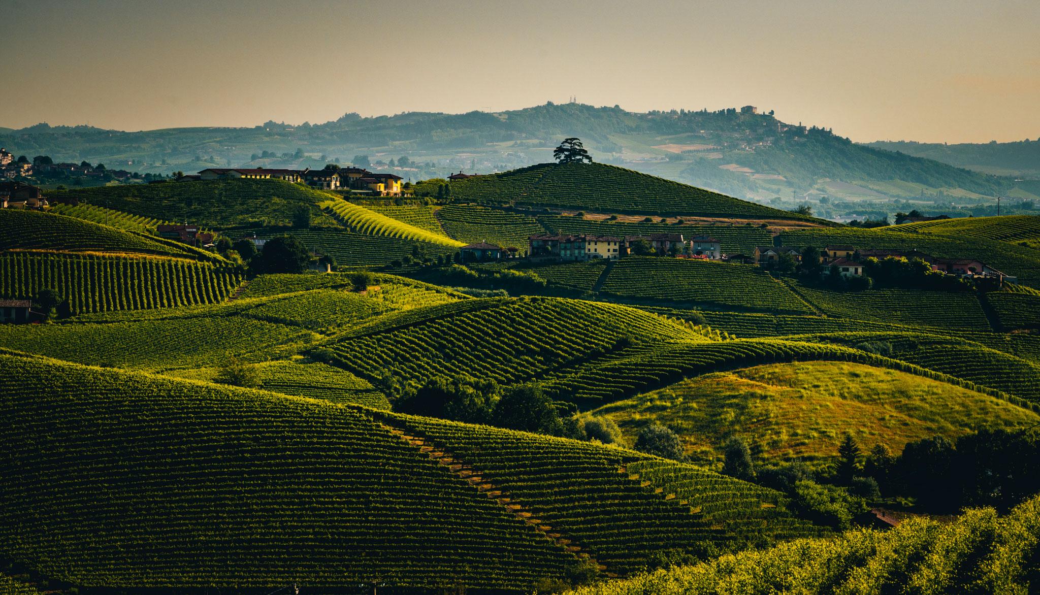 Italy : Piedmont : A view of il Cedro in La Morra