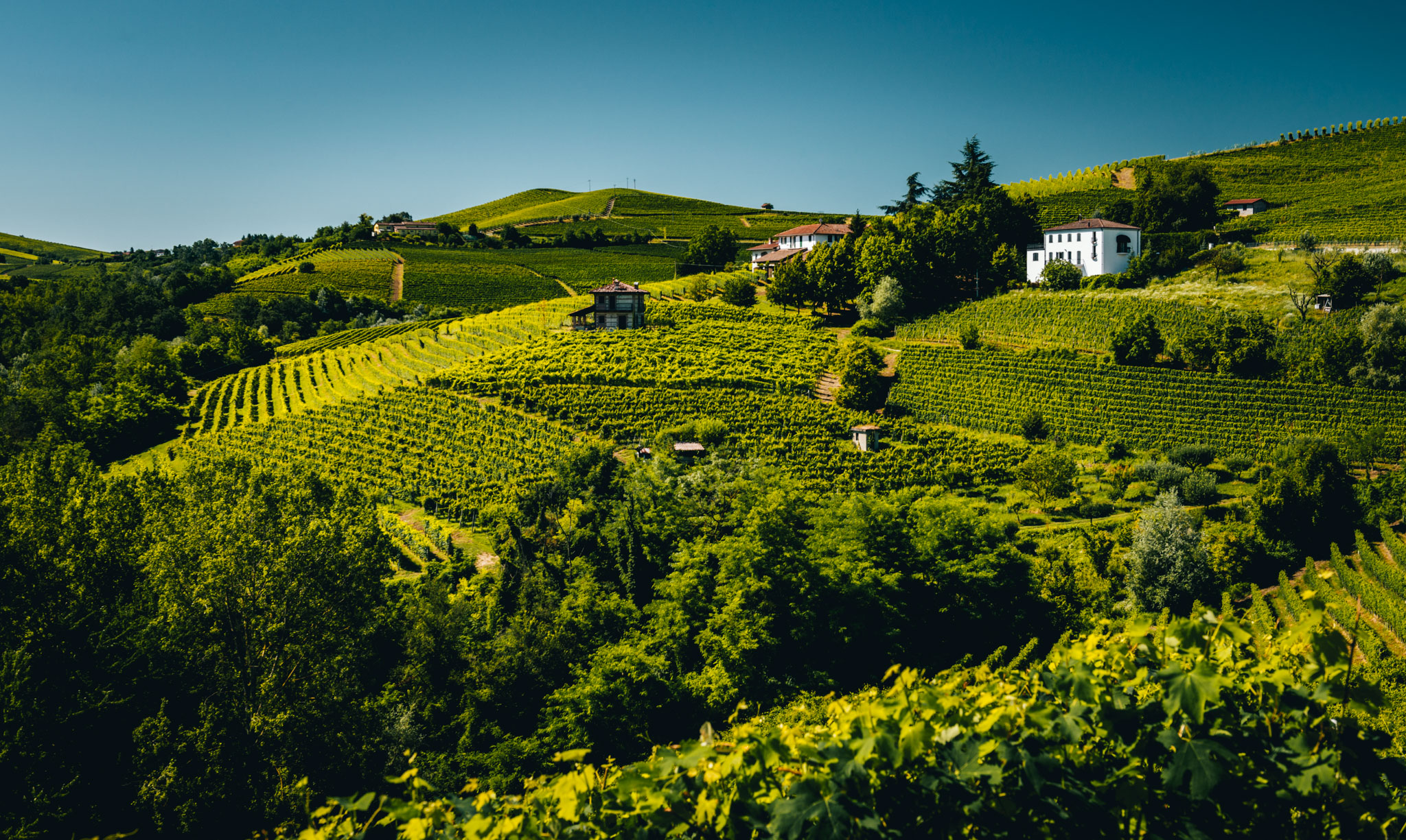 Italy : Piedmont : Le Coste vineyard in the foreground, Ravera in the background