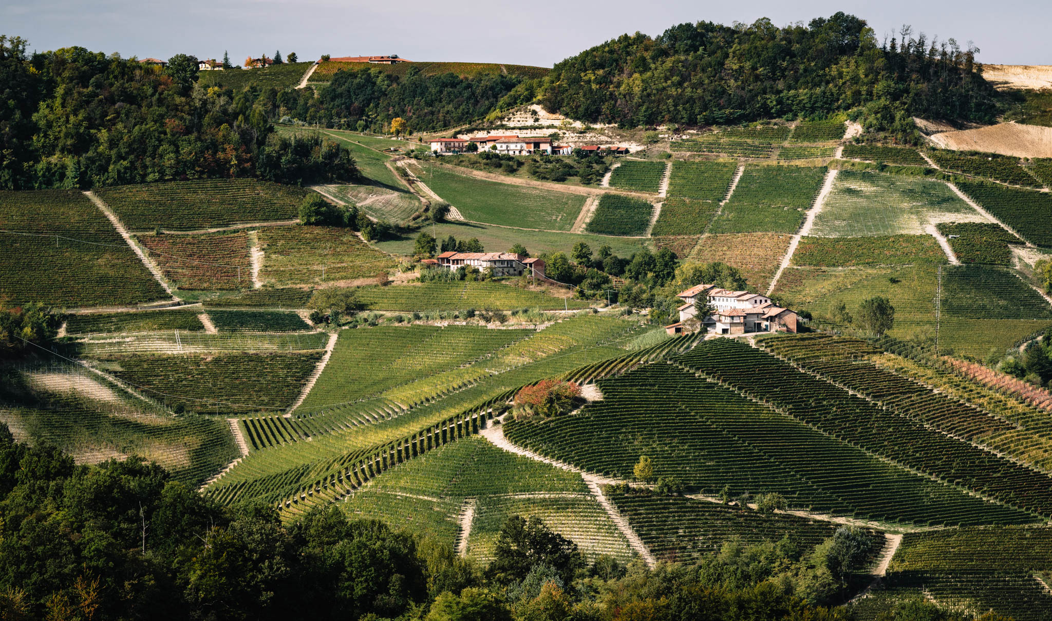 Italy : Piedmont : Elio Grasso's estate surrounded by the Ginestra cru in Monforte d'Alba