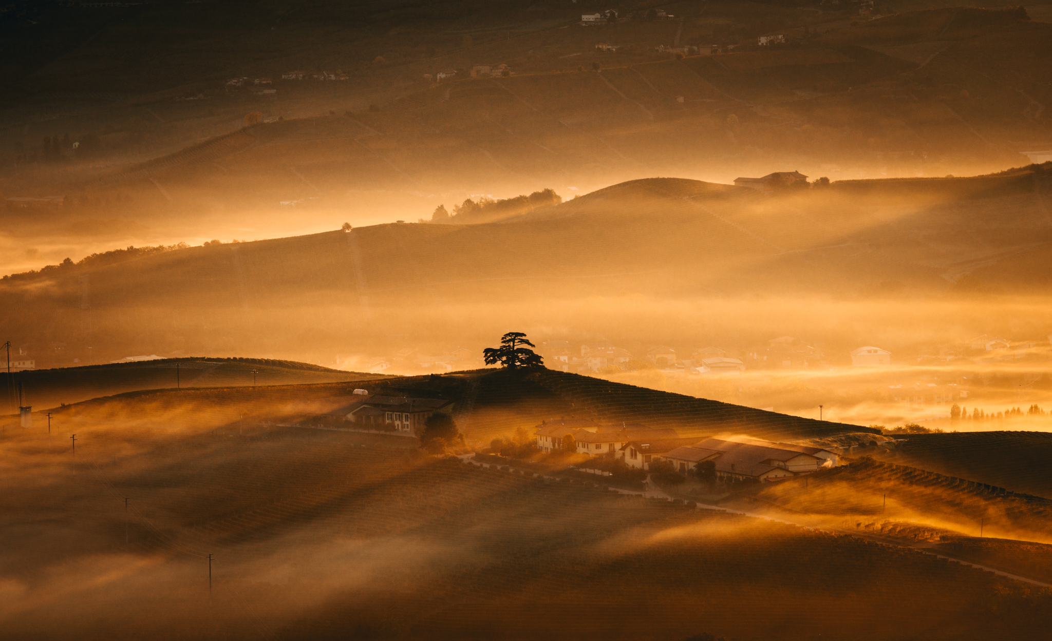 Italy : Piedmont : il Cedro in La Morra bathed in early morning light and fog