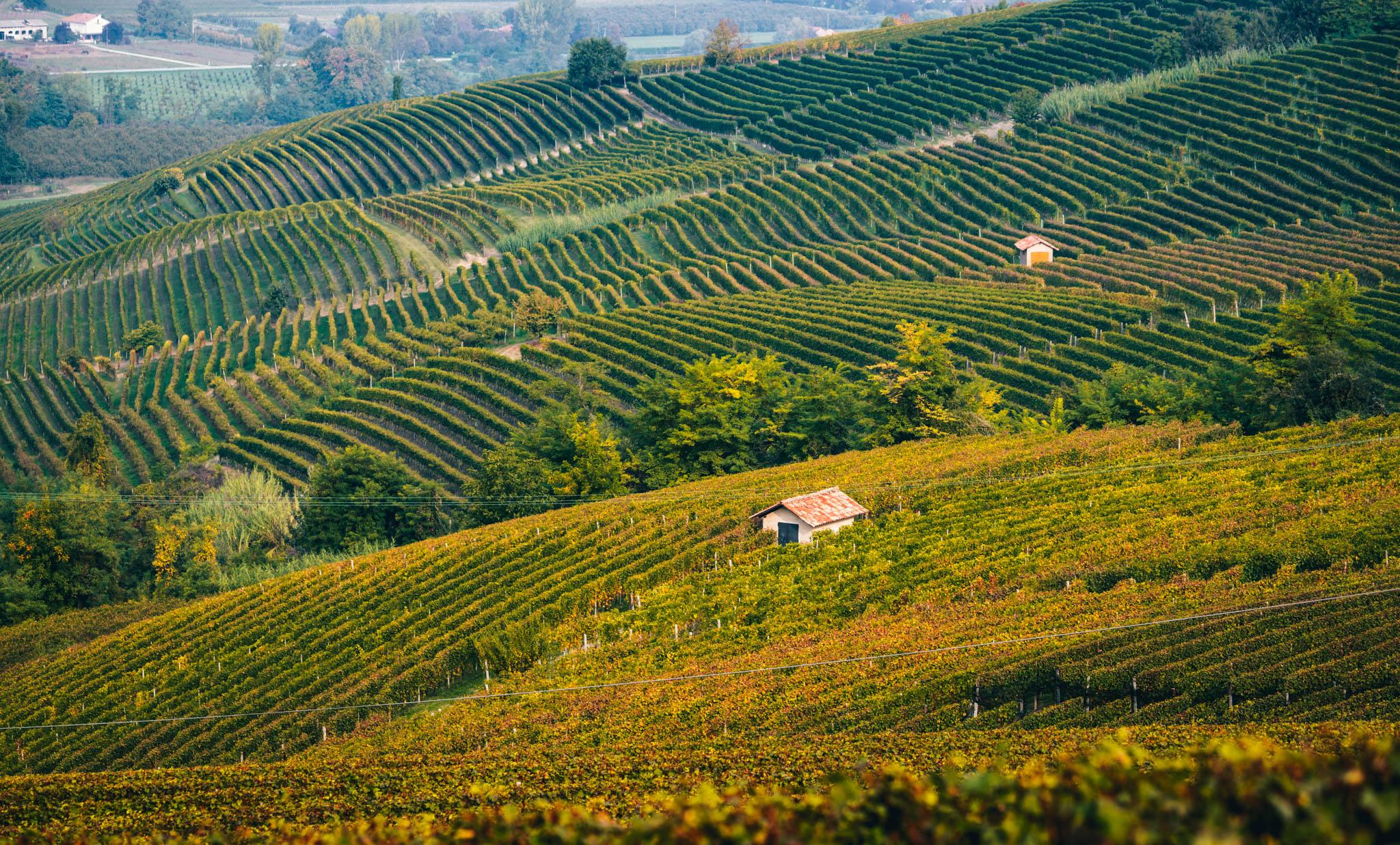 Italy : Piedmont : Villero cru in Castiglione Falletto