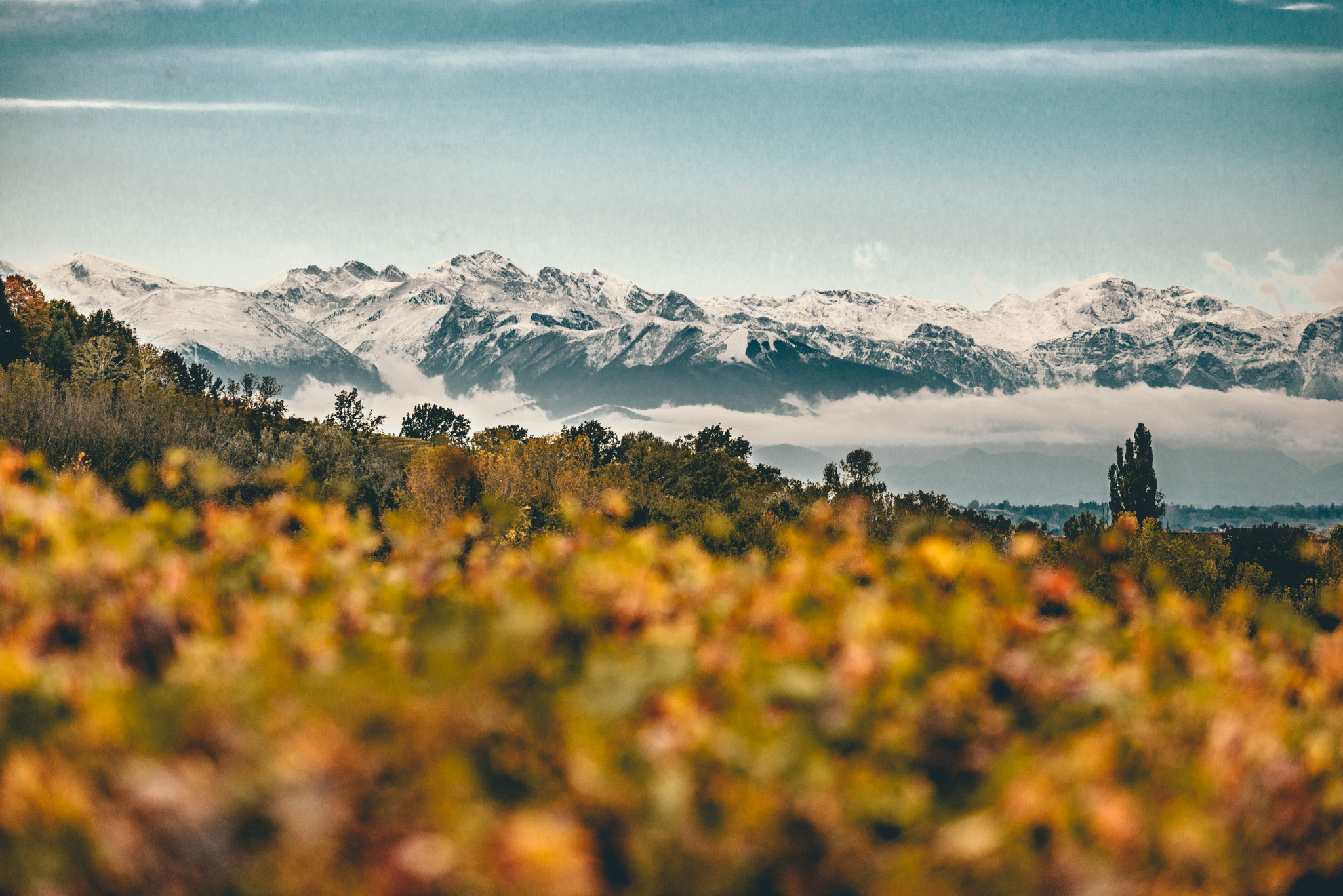 Italy : Piedmont : The Alps as seen from Verduno