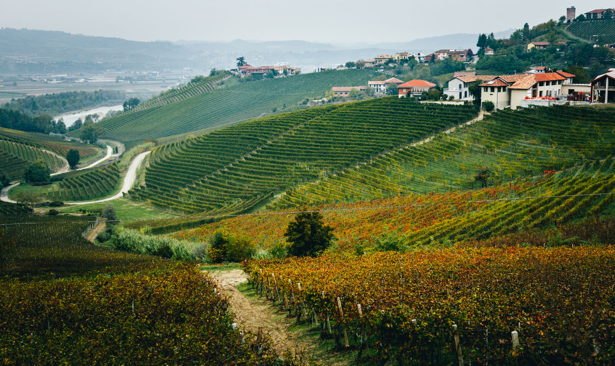 Italy : Piedmont : Paje and Secondine crus in Barbaresco, with the Tanaro river in the background