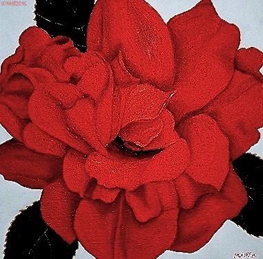 16X16Fireglow Rose_002.jpg