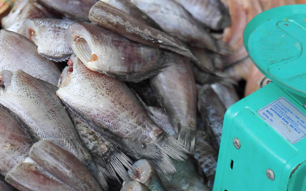 Christian-Schaffer-Asia-Thailand-Bangkok-Street-Food-Fish.jpg