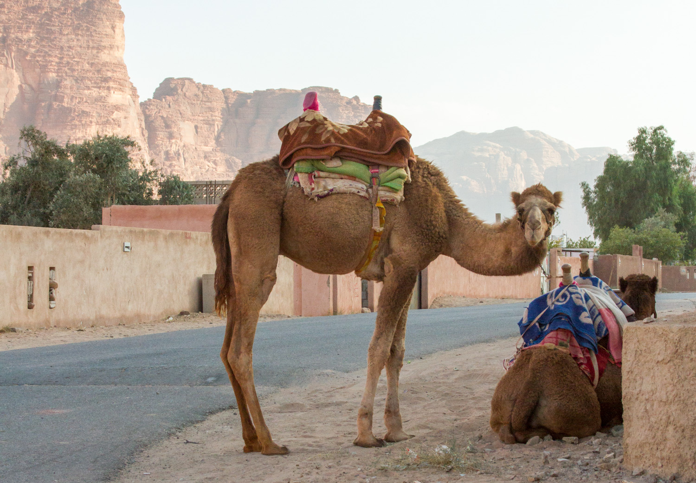 Christian-Schaffer-Jordan-Wadi-Rum-Desert-Camel-003.jpg