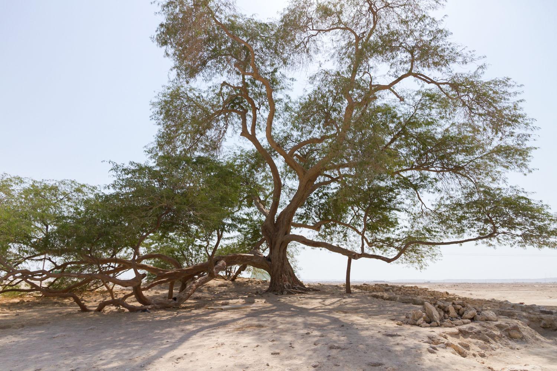 Christian-Schaffer-Bahrain-Desert-Tree-of-Life.jpg