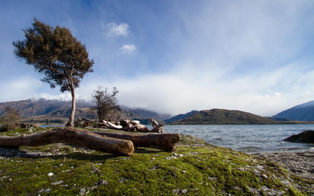 Christian-Schaffer-New-Zealand-Lake-Wanaka-Tree.jpg