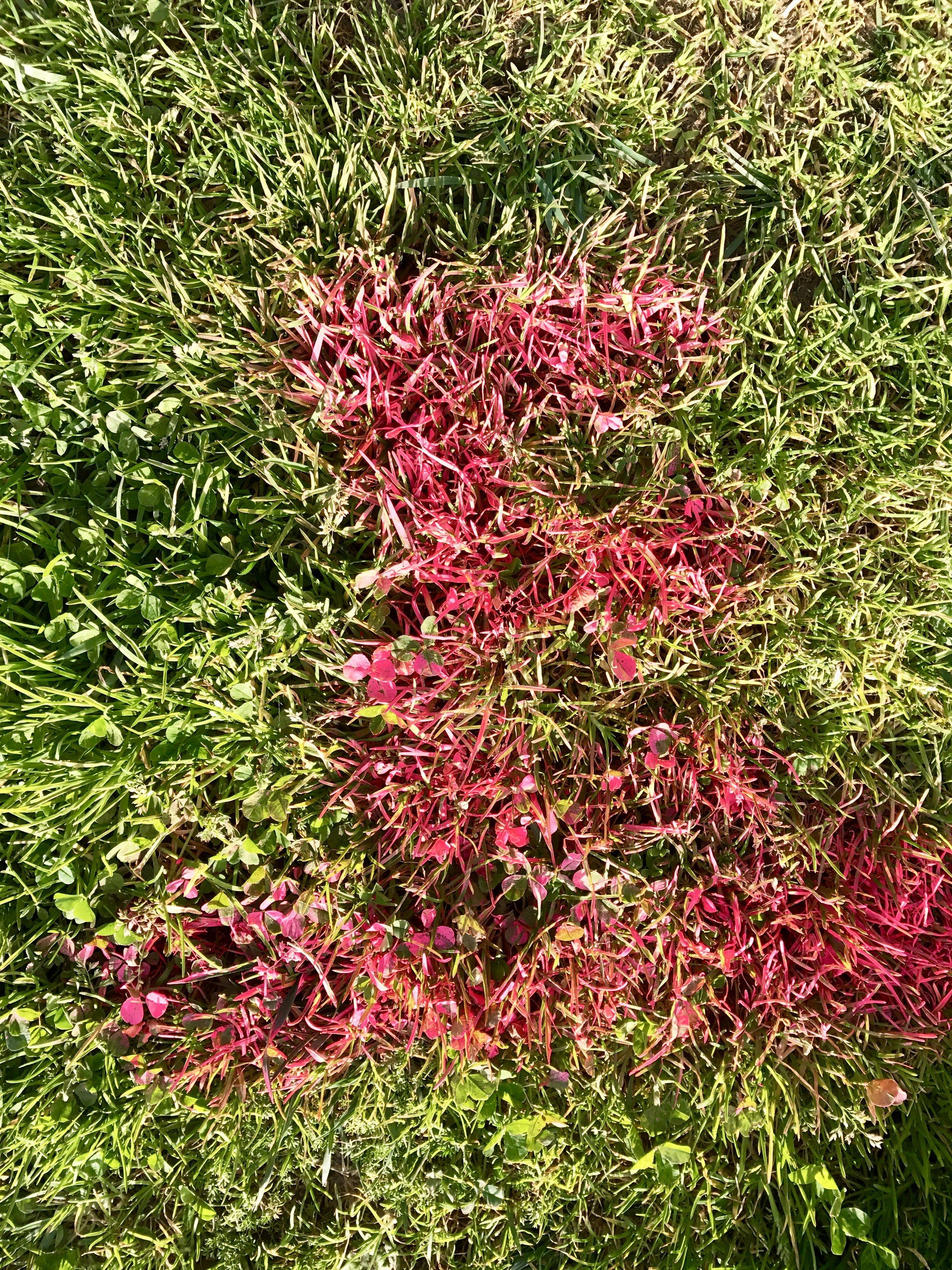 Neon Grass