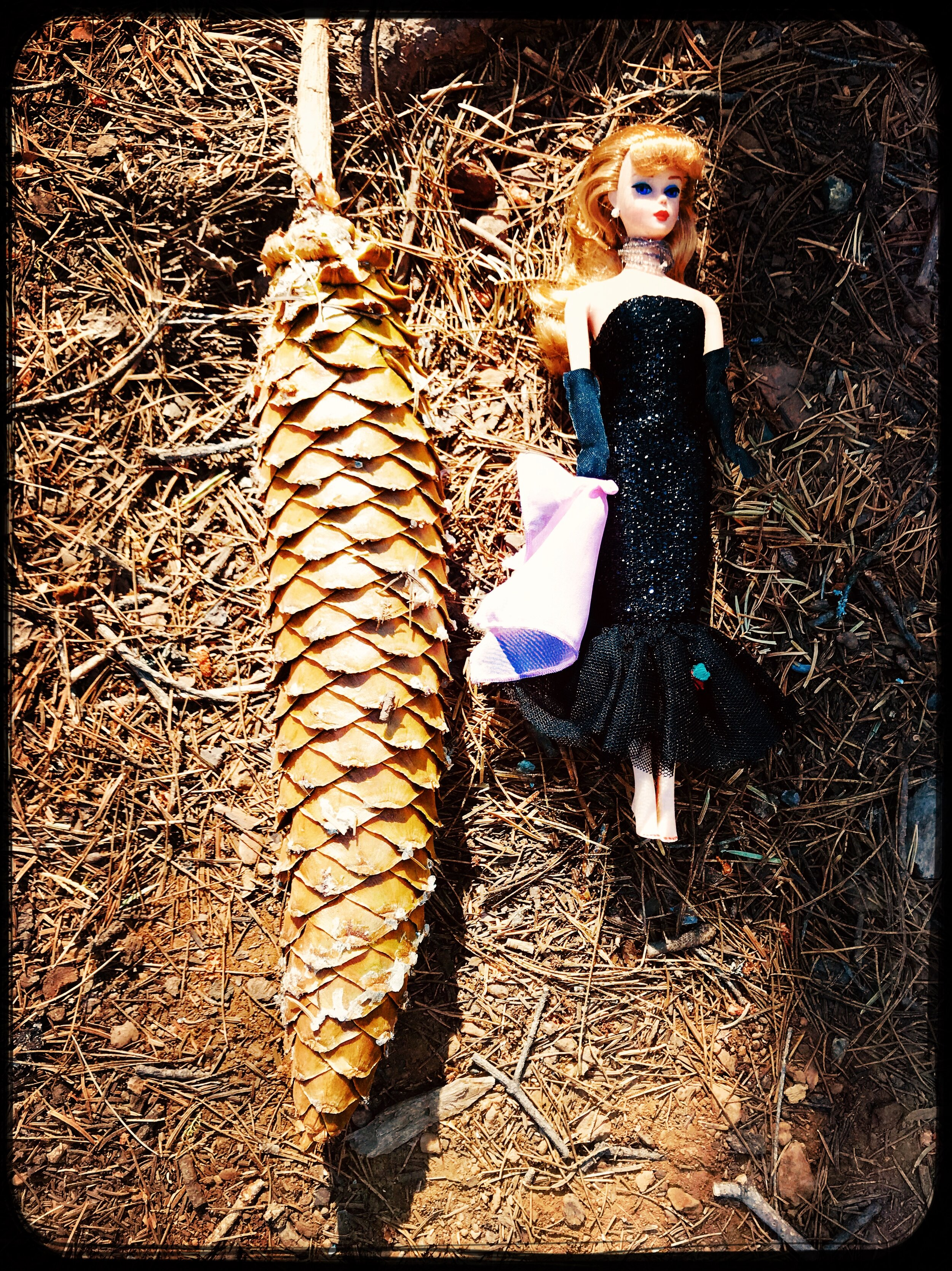Look how big this pinecone is compared to Barbie (she never dresses appropriately for roughing it)!