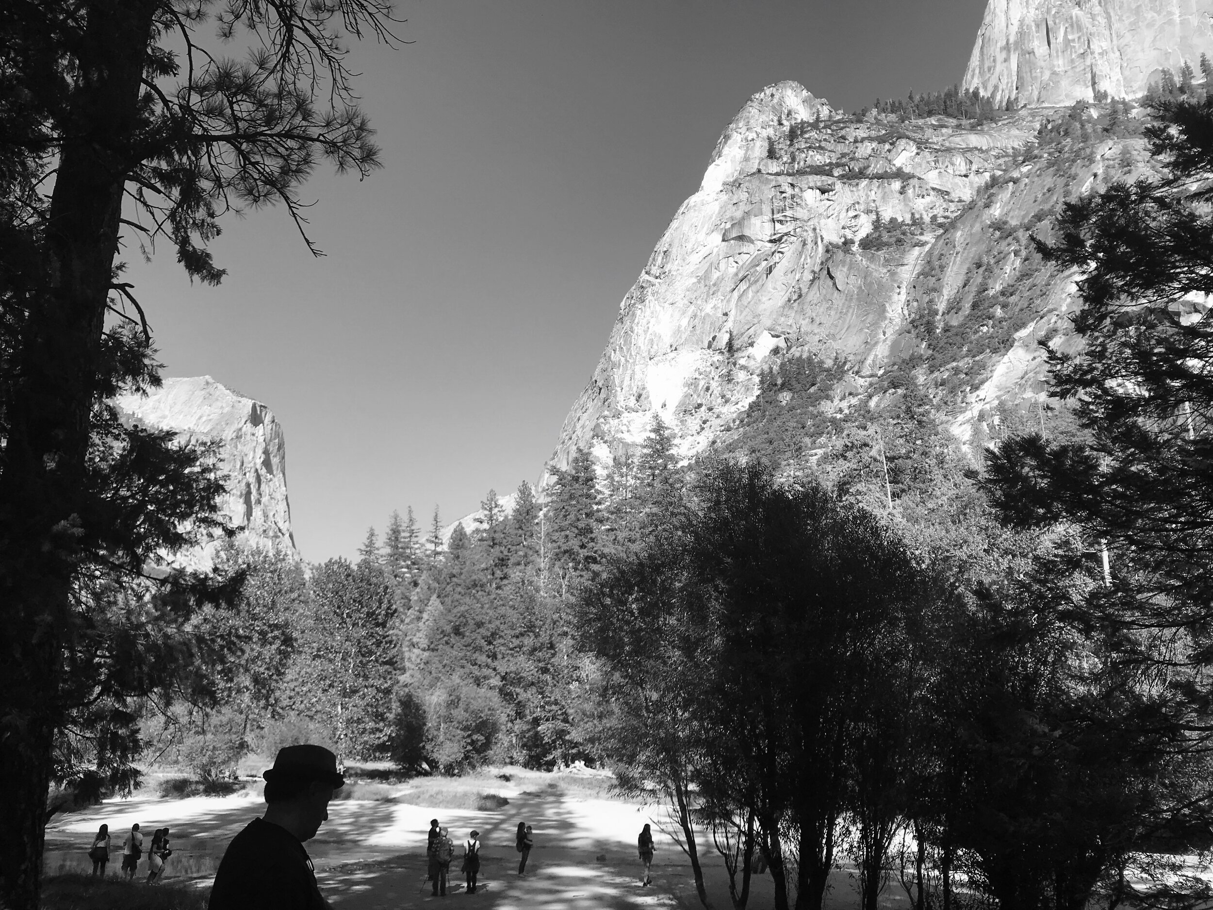 Alarmed by a completely dry lakebed, we explored Mirror Lake at Yosemite where we watched a caterpillar burrow (below).