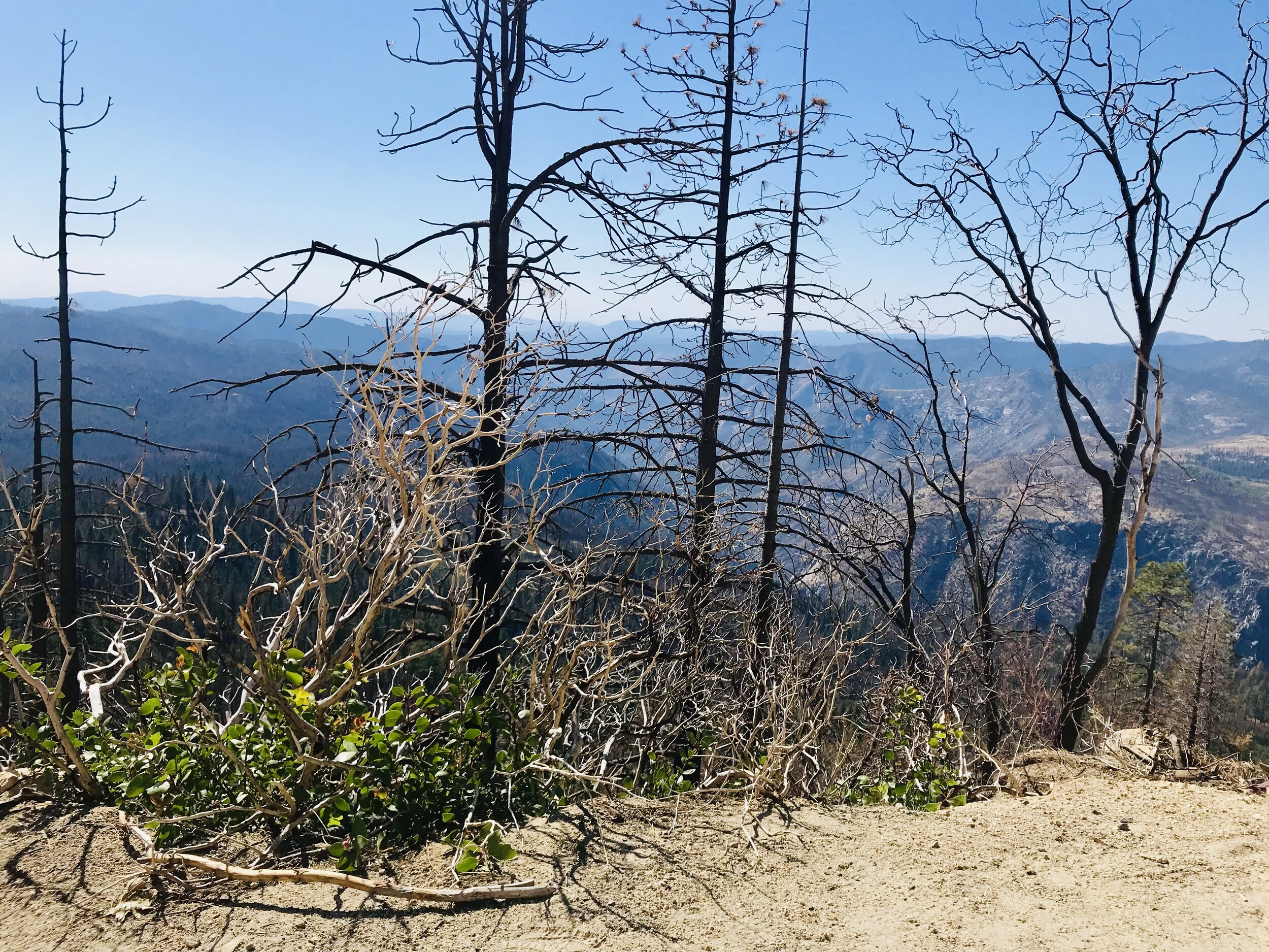 Burnt trees everywhere, but the landscape is coming back to life to varying degrees.