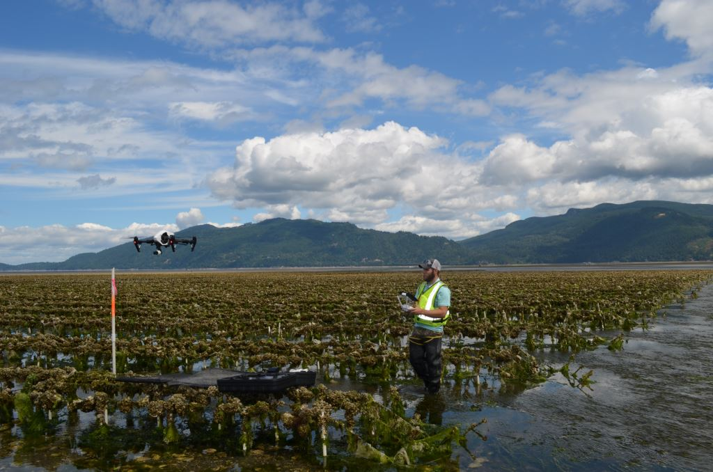 Land study for Taylor Shellfish Farms
