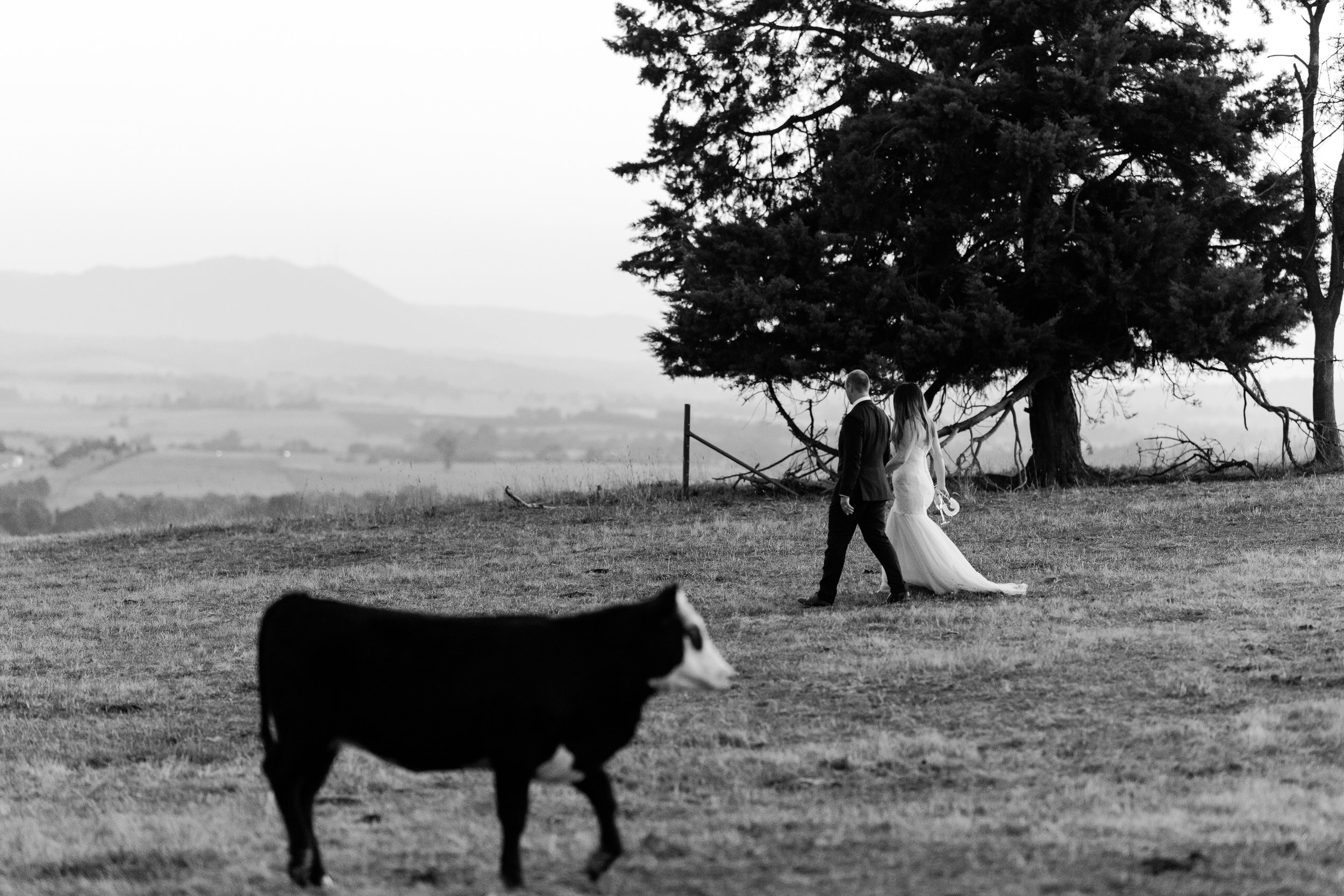Justin_And_Jim_Photography_Balgownie_Winery_Wedding59.JPG