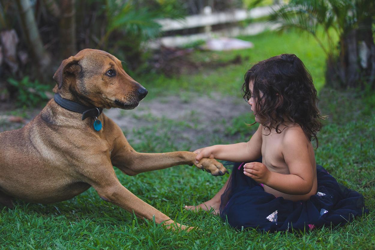 Australian Destination Pet, Dog and Wedding Photographers - Noosa, Sunshine Coast