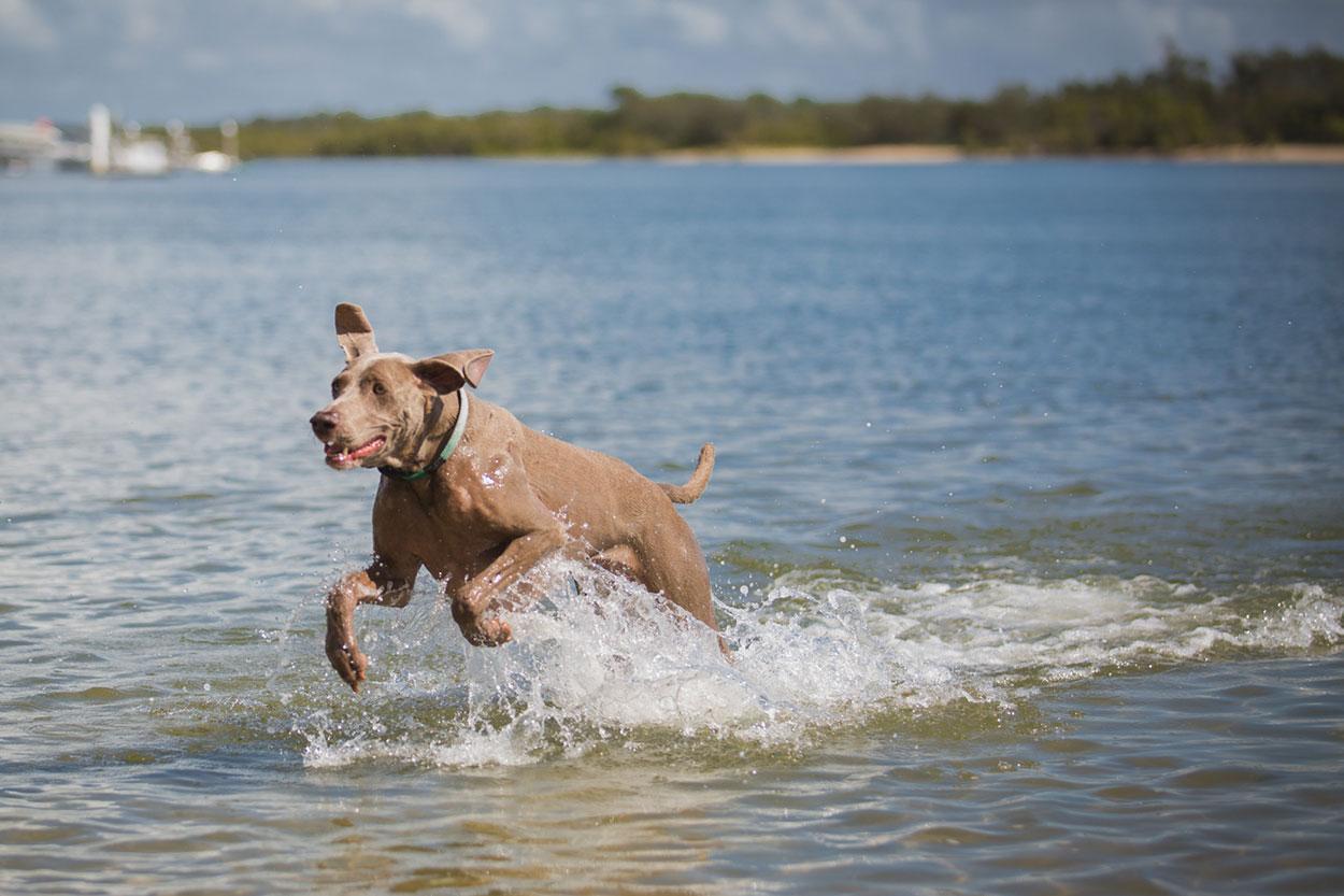 Noosa Beach Dog and Animal Photographer - Sunshine Coast, Queensland, Australian Destination