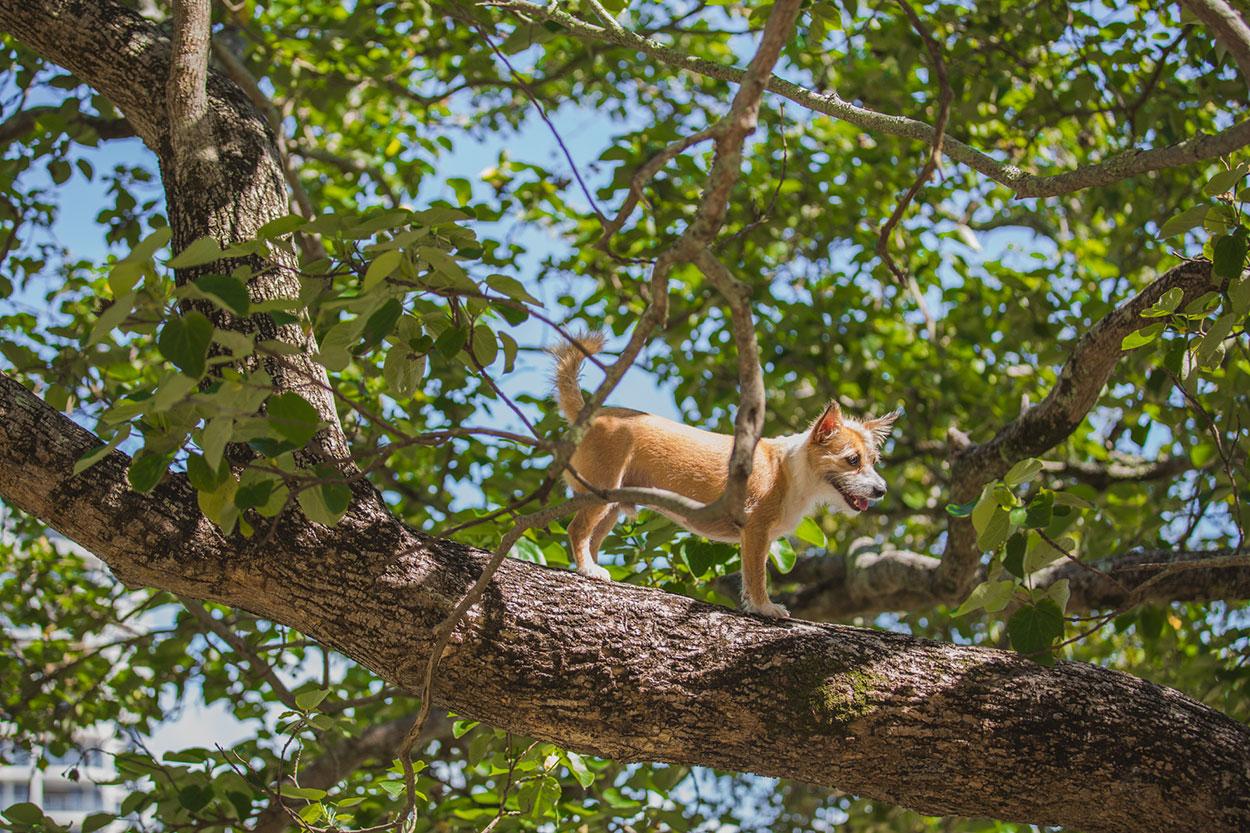 sunshine-coast-pet-photographer-animal-mooloolaba-maroochydore-buderim-mudjimba-marcoola-coolum-beach-sunrise-noosa-national-park-maleny-caloundra-kawana-animal-dog-04