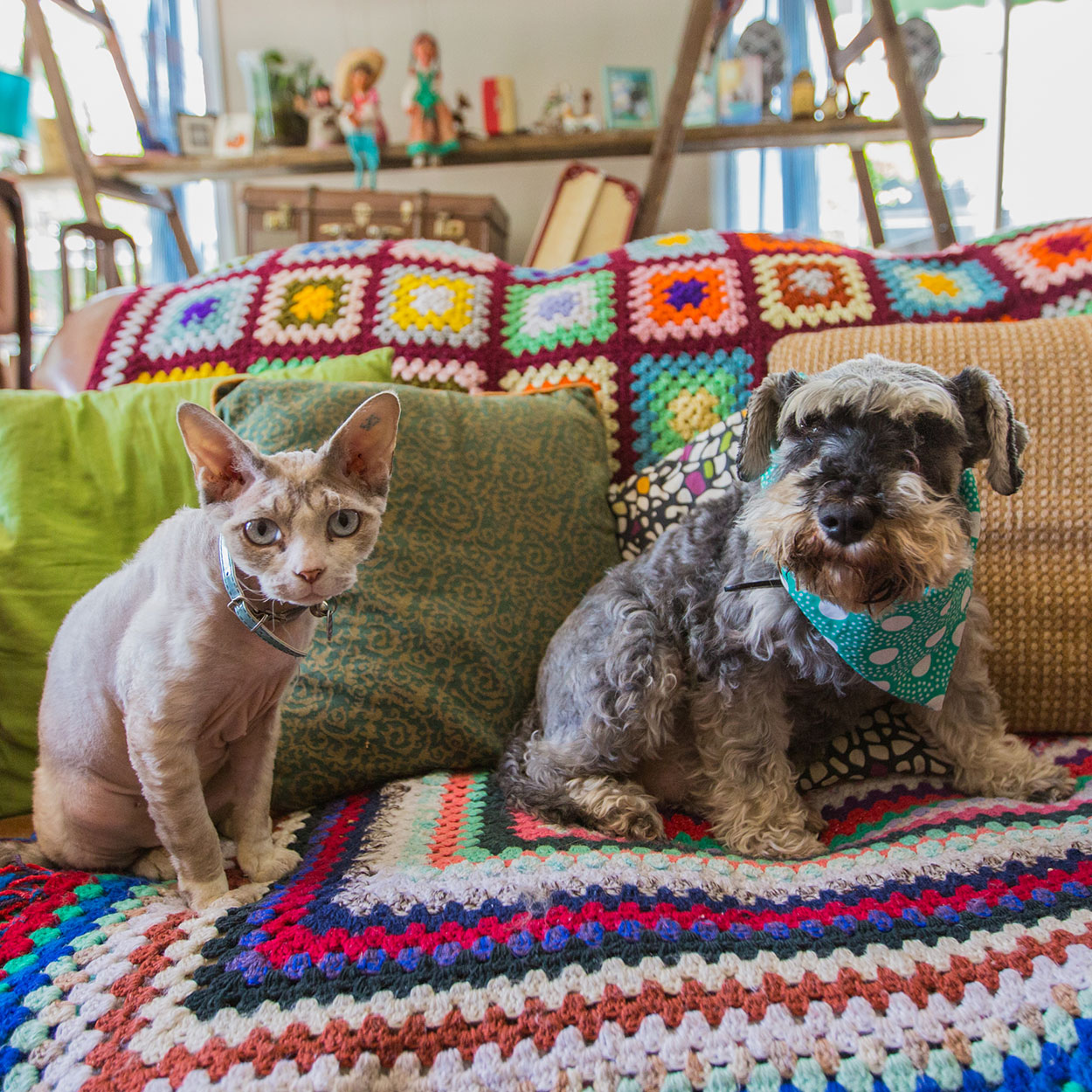 sunshine-coast-animal-photographer-animal-mooloolaba-maroochydore-buderim-mudjimba-marcoola-coolum-Australian-noosa-national-park-maleny-caloundra-dog-cat-all-the-love-in-the-world-photography-06