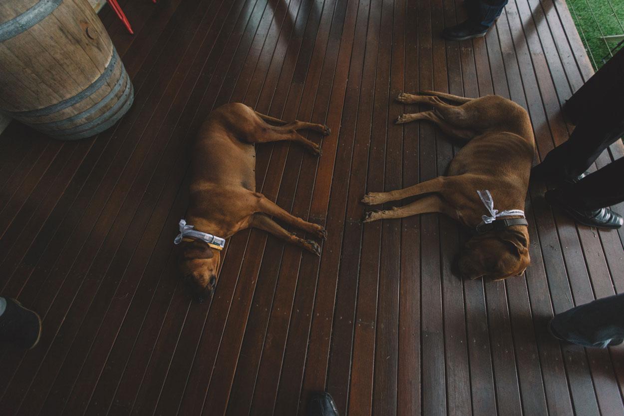 Sunshine Coast, Queensland, Australian Pet and Wedding Photographers - Caloundra, Brisbane Elopement Destination Photography Packages