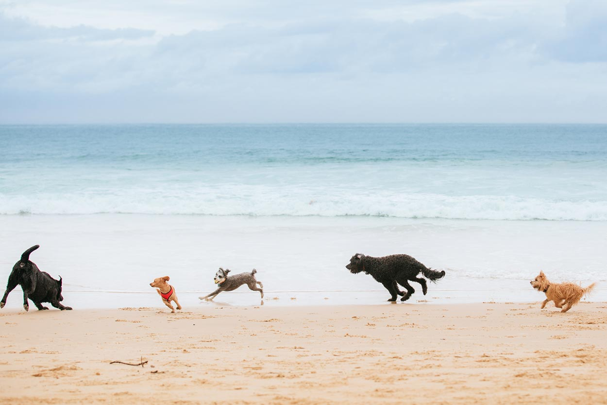 Mooloolaba and Noosa Pet Portrait Session - Sunshine Coast, Australian Dog Photographer