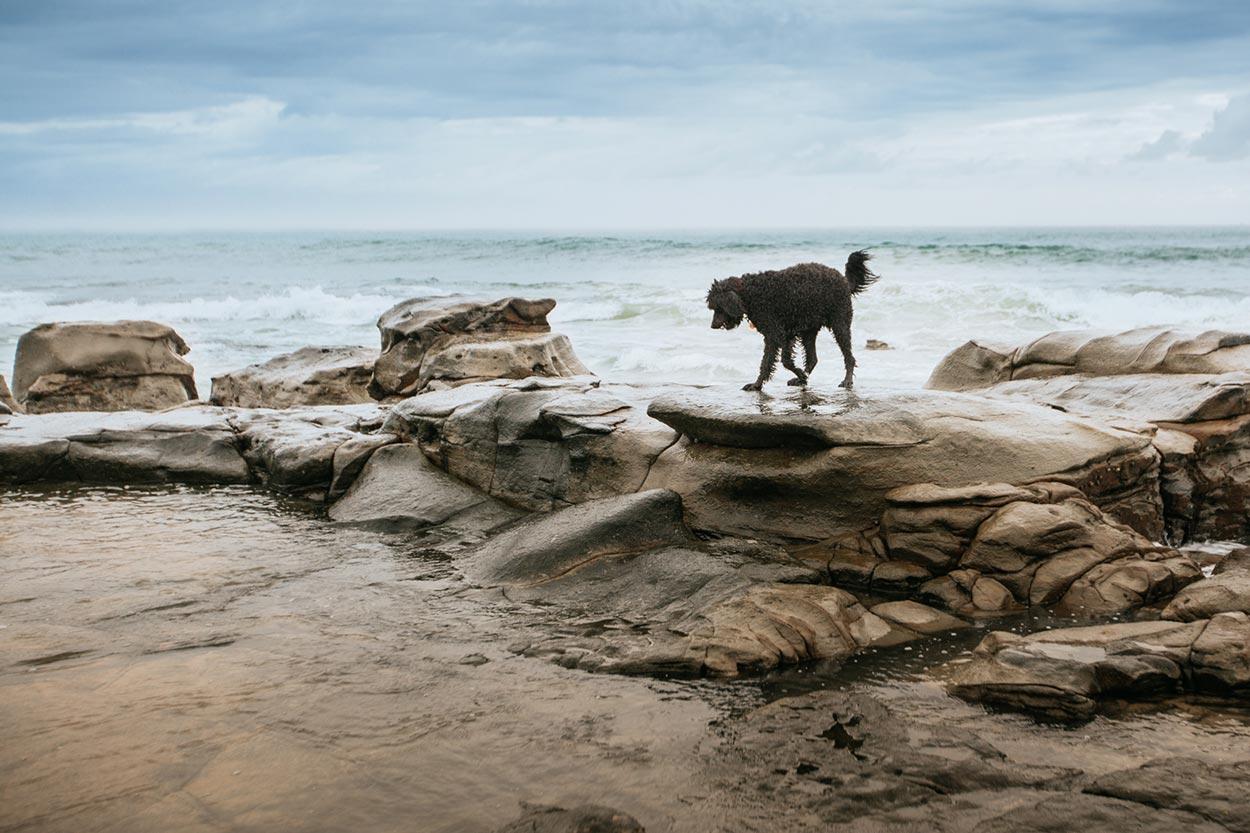 Alexandra Headland Pet Portrait Session - Sunshine Coast, Australian Destination Dog Photographers