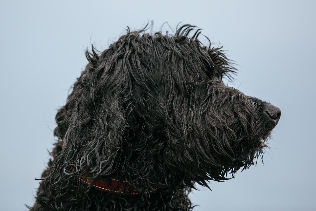 Mooloolaba, Noosa Dog Pet Photo Session - Sunshine Coast Dog Photographer, Australian
