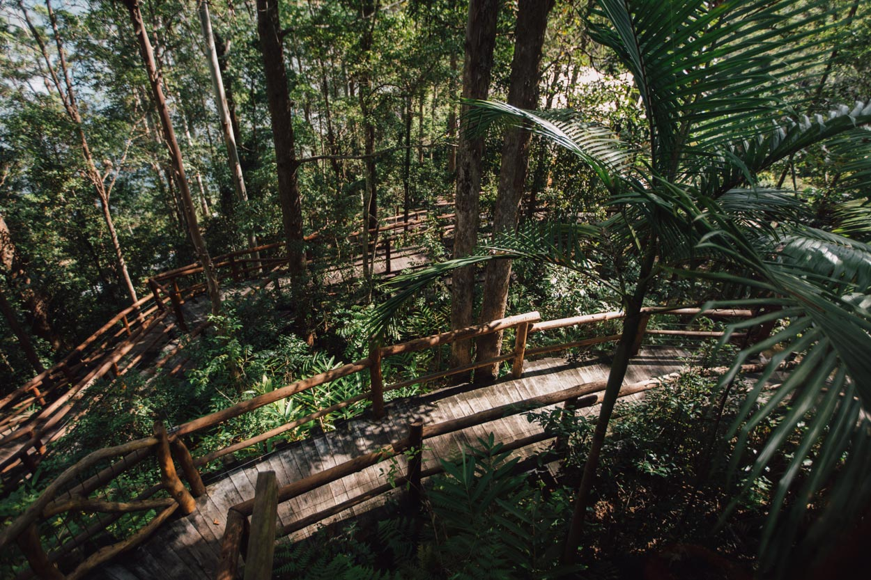 Montville Semi Tropical Pre Destination Wedding Photography, Queensland - Australian Elopement Photographers