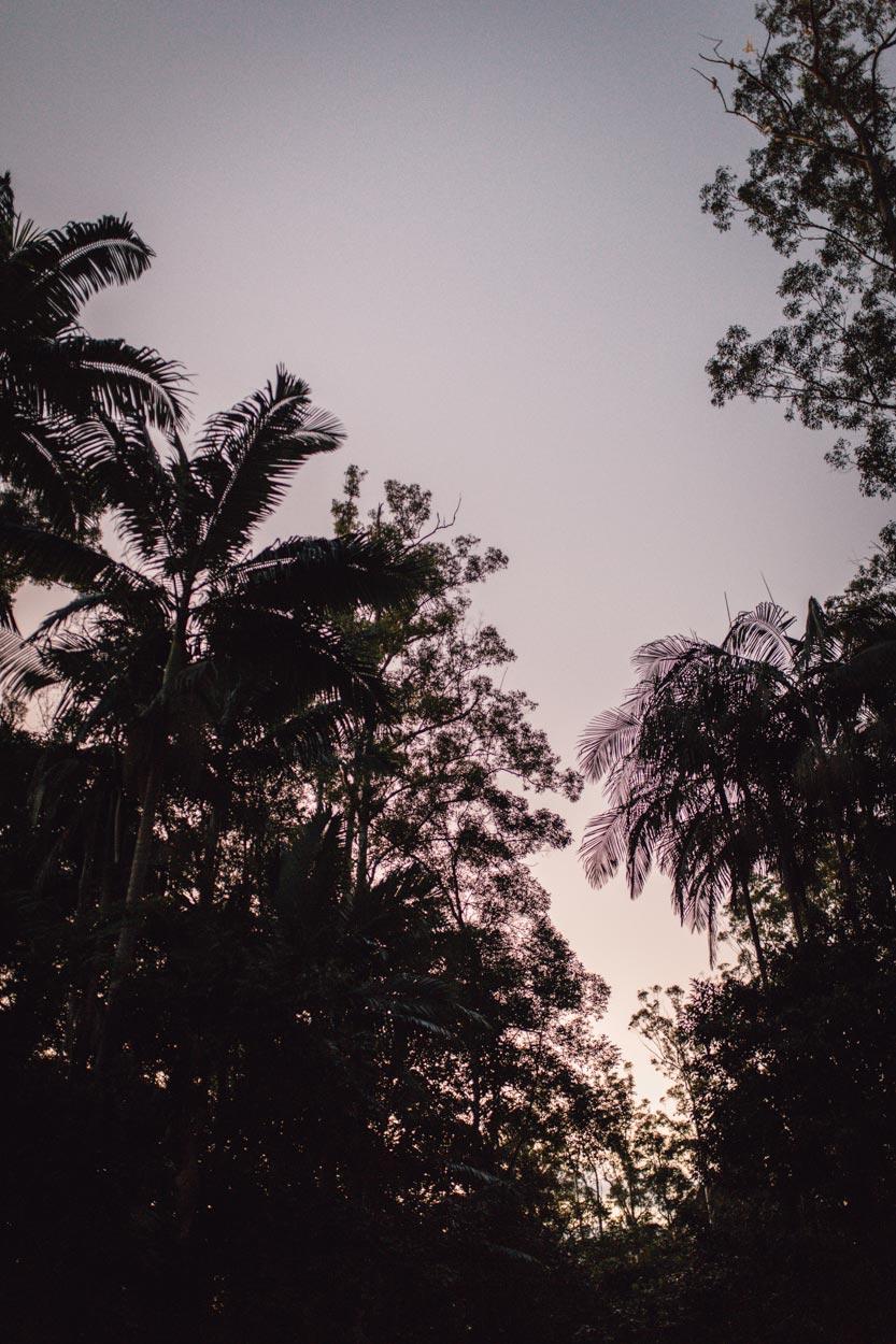 Tropical Sunshine Coast, Australian Pre Wedding - Montville, Brisbane Photographer Destination