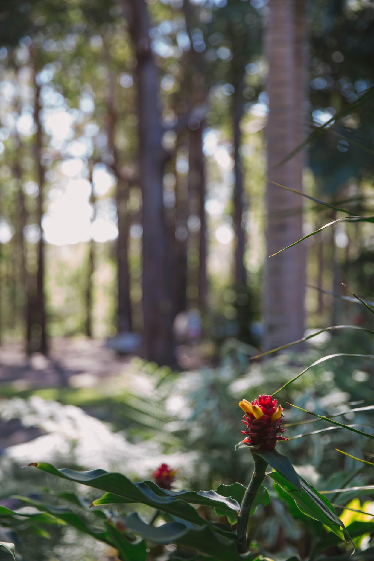 Noosa, Doonan Pre Wedding Destination Photographer - Sunshine Coast, Brisbane, Australian Elopement