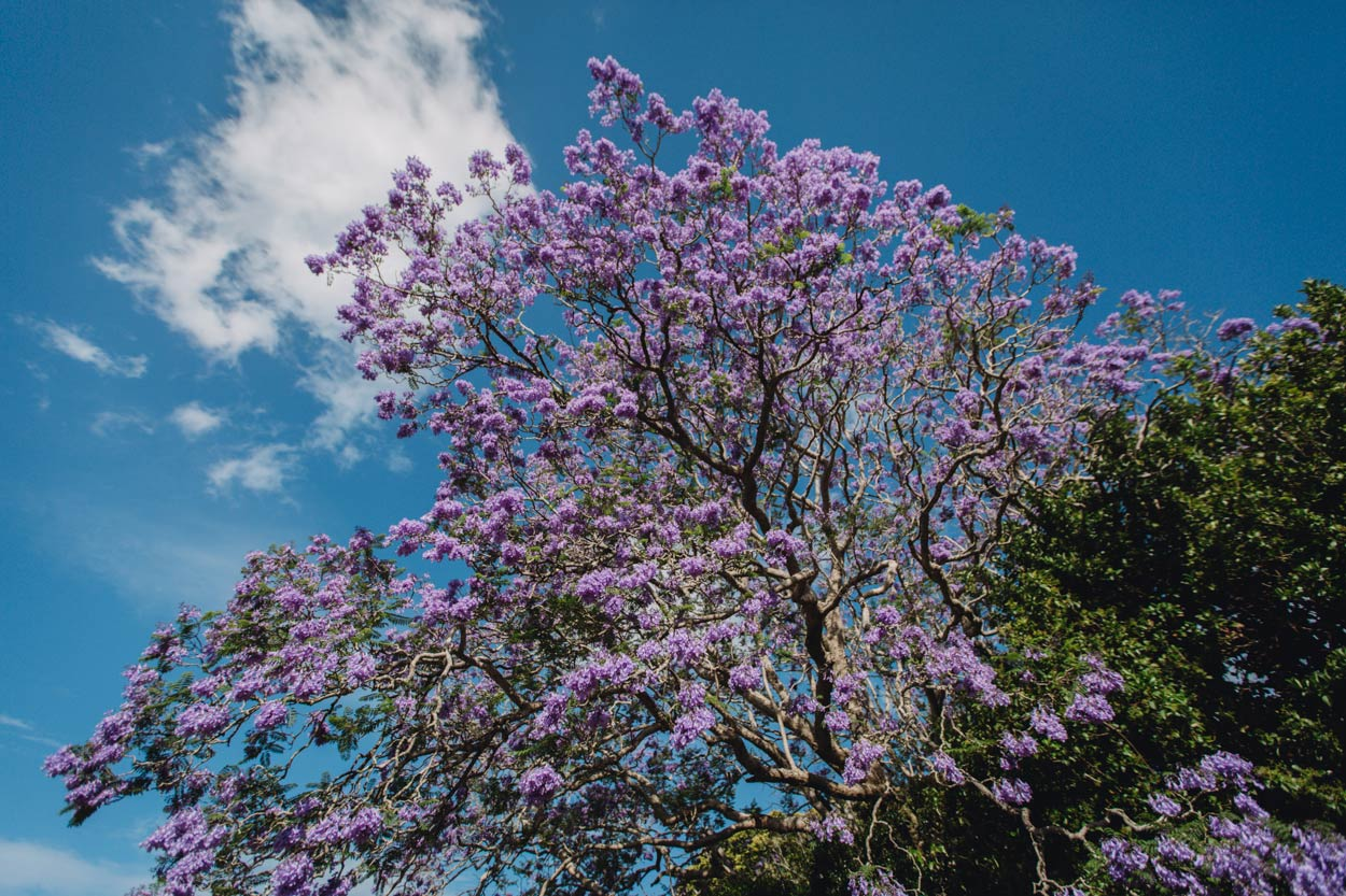 Nambour Pre Destination Wedding Photographers - Sunshine Coast, Queensland, Australian Blog Packages