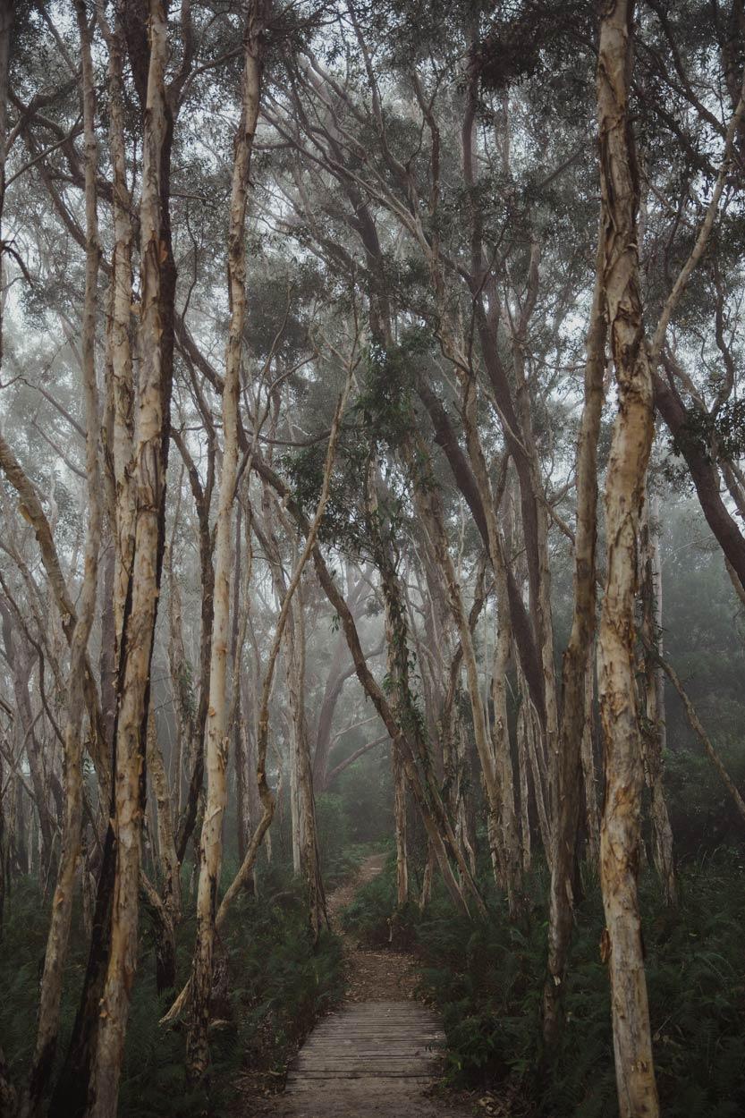 Noosa & Fraser Island Destination Wedding Photographer Elopement - Brisbane, Sunshine Coast, Australian