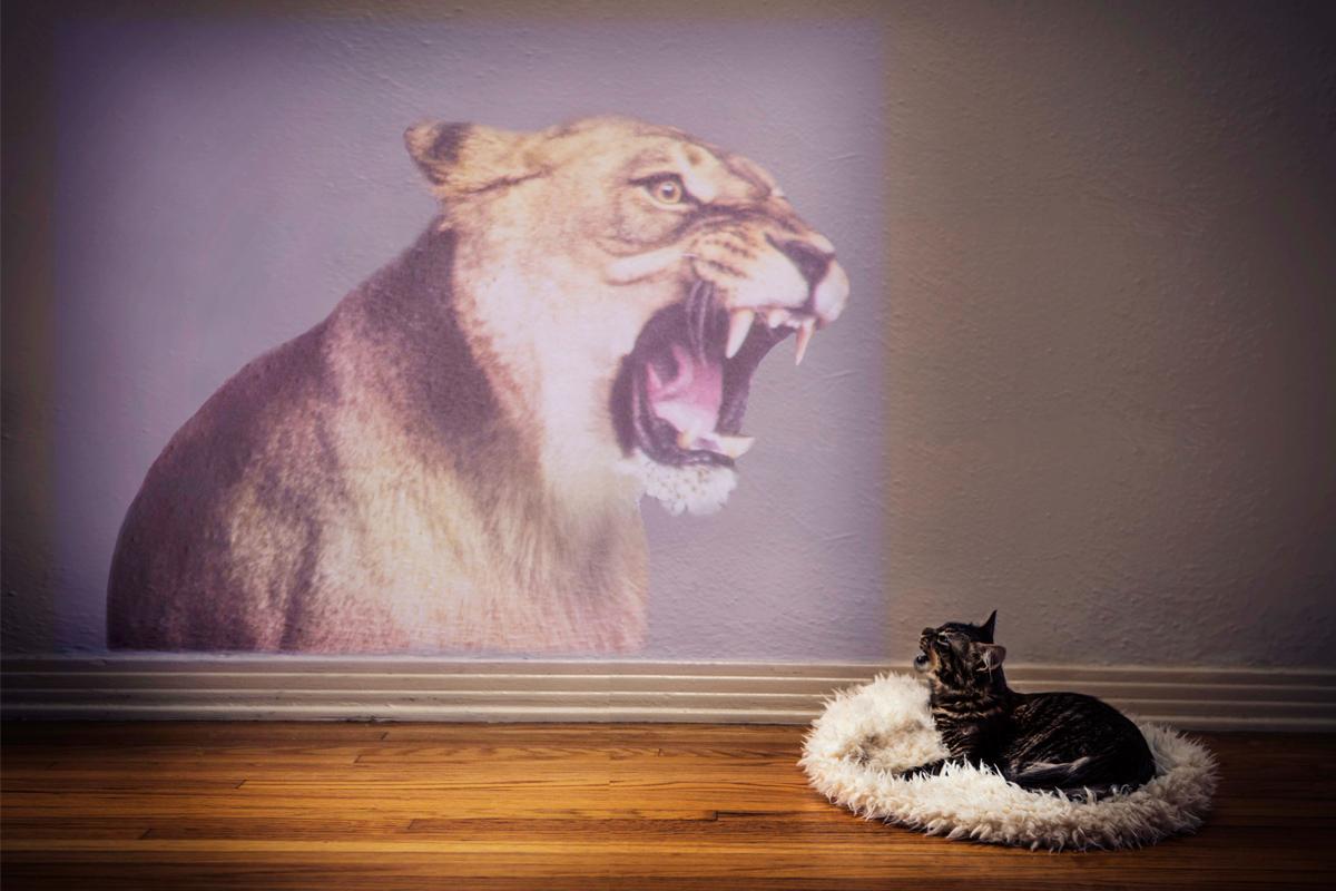 4.Cat_Lion_Beam.jpg