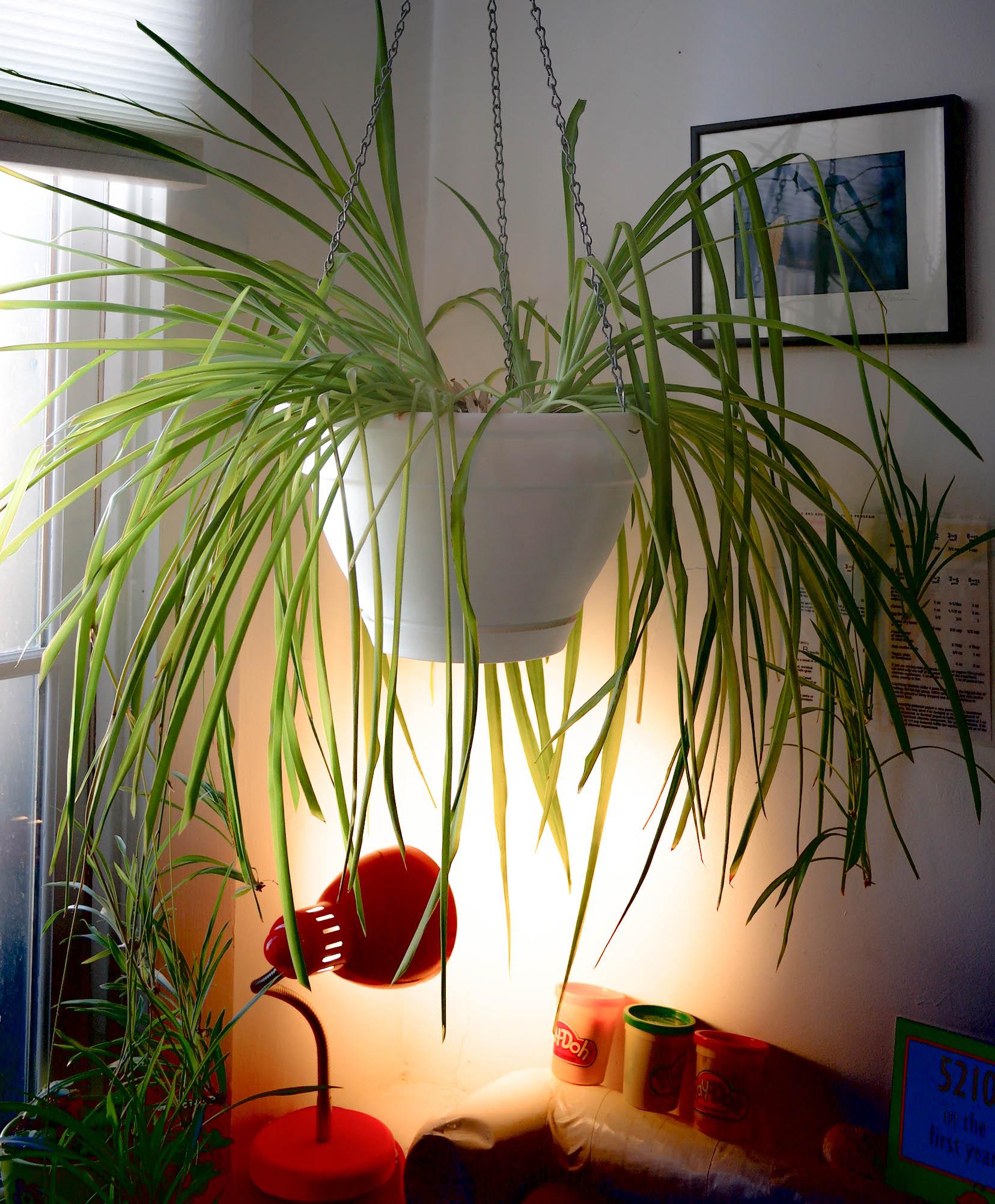 Hanging Plant Installation