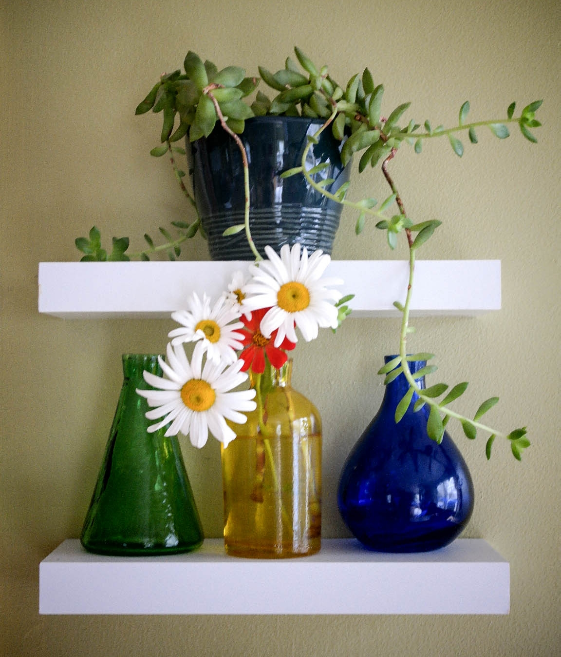 Plant Shelf Daisies (1 of 1).JPG
