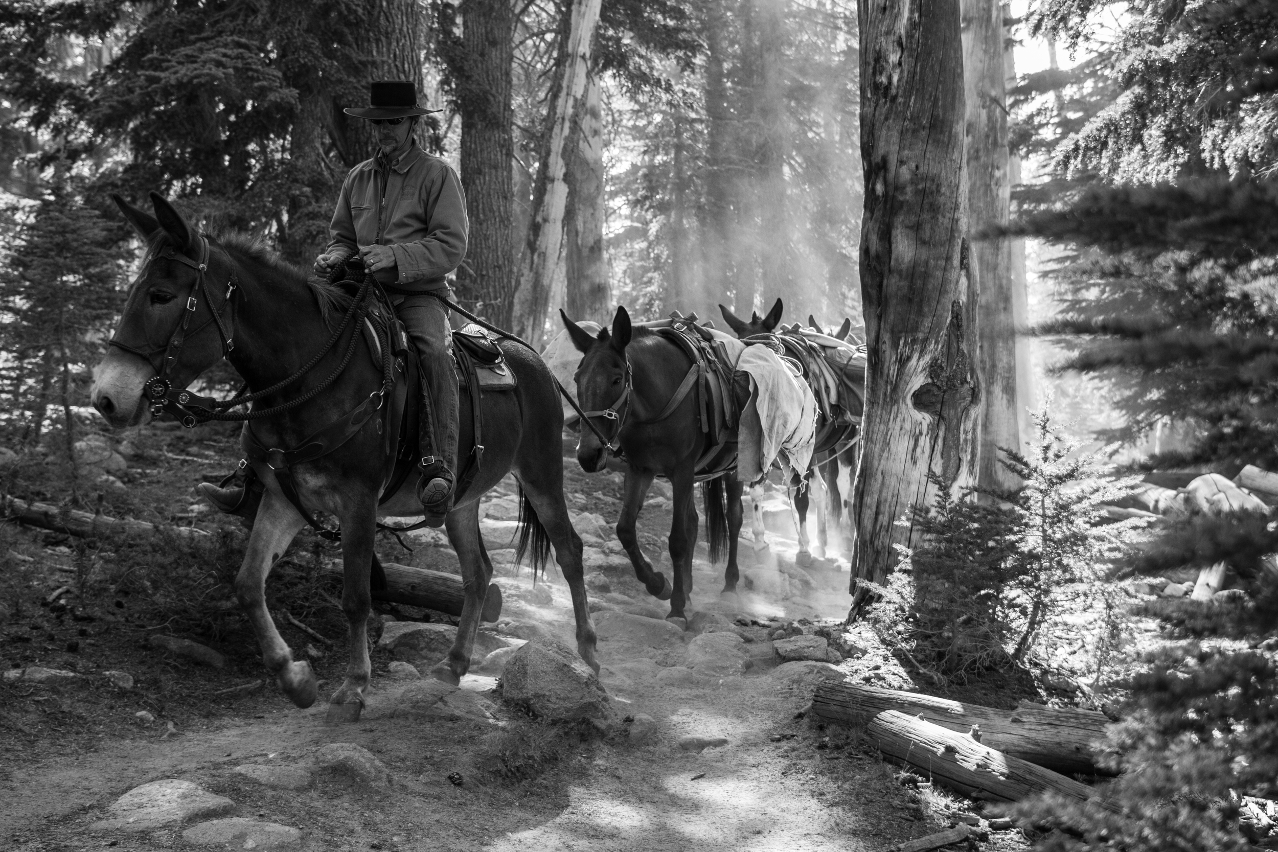 Tuolumne Meadows, Yosemite NP, CA