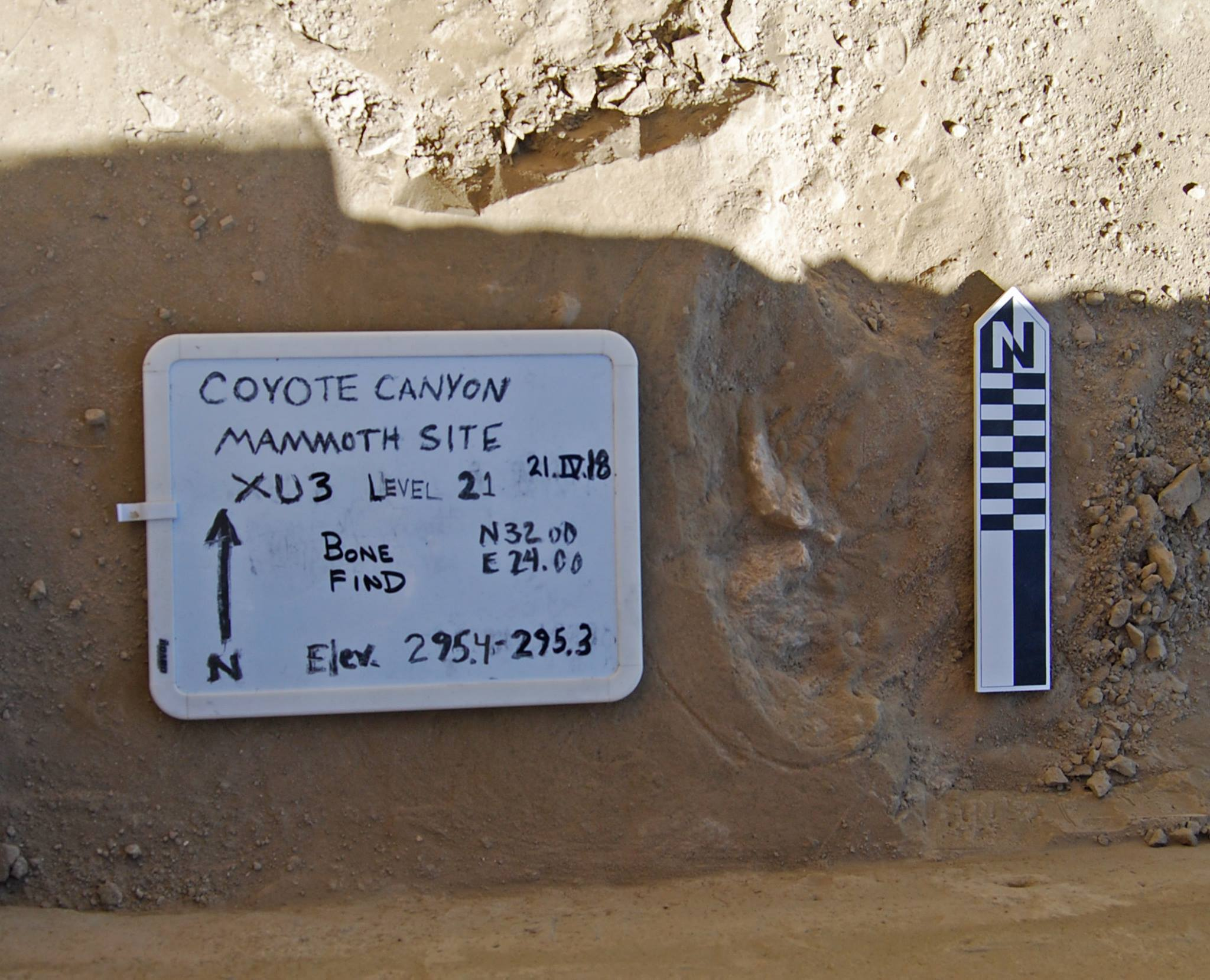 Bone find image at Coyote Canyon Dig Site. Image from MCBones Research Center Foundation Facebook page.