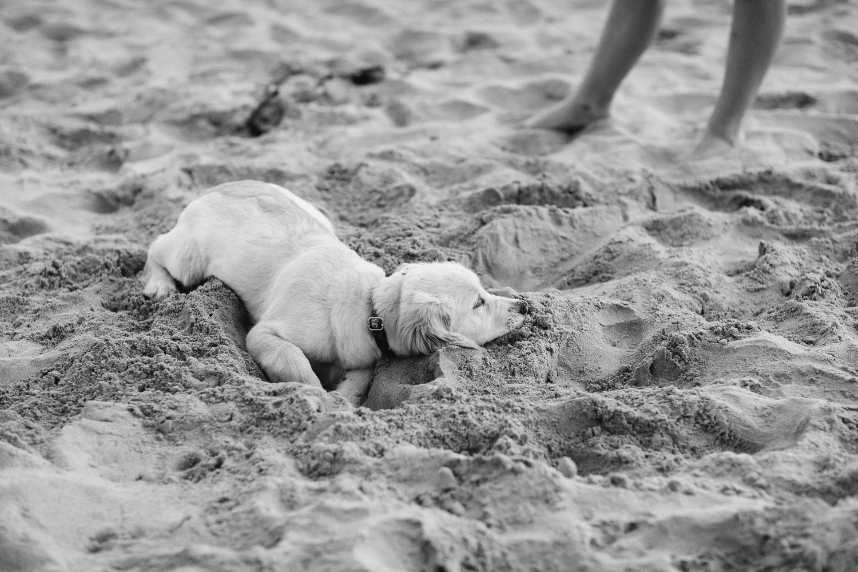 Family Photographer Central Coast Natural Relaxed Heartfelt-16.jpg
