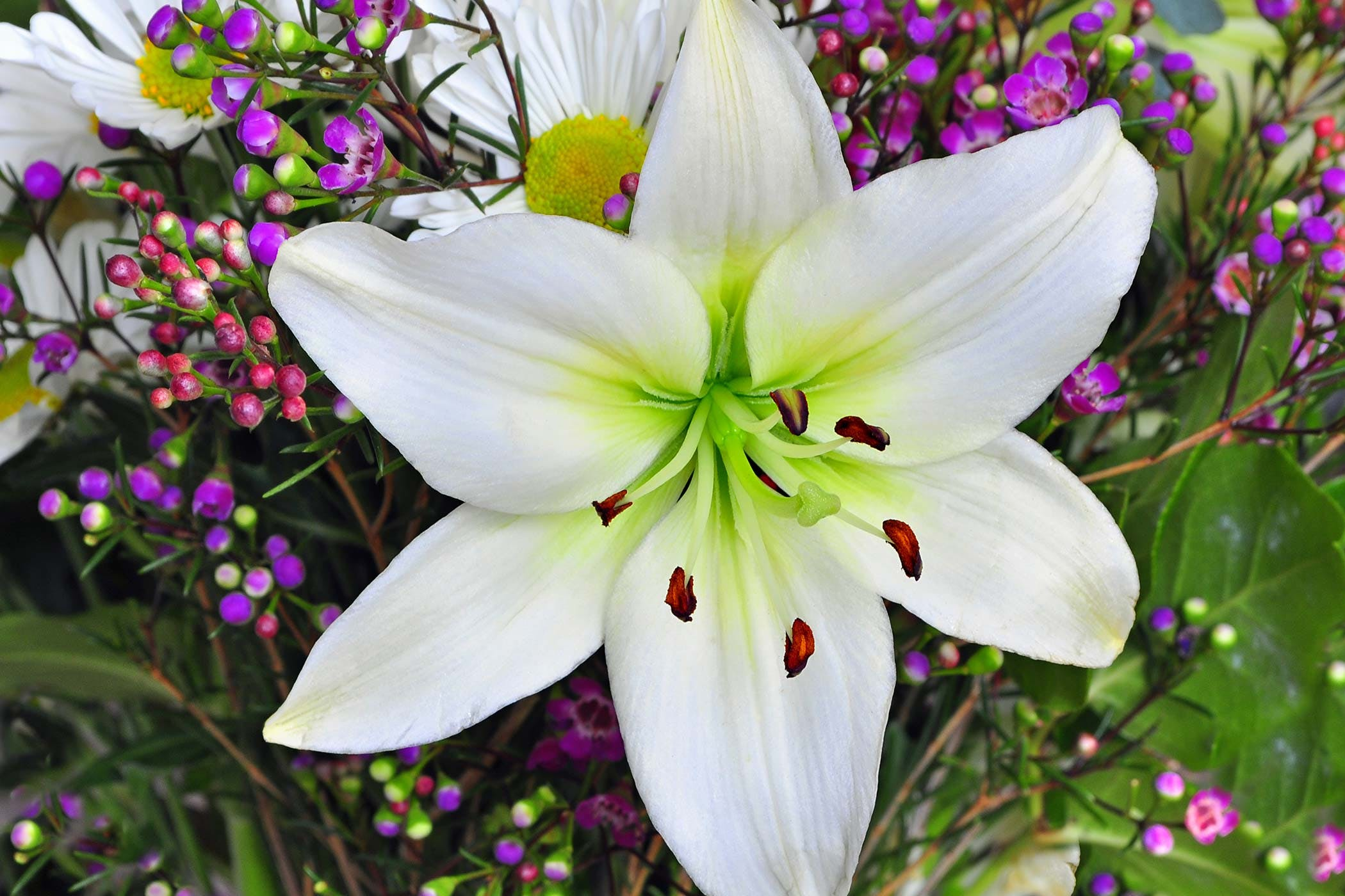 easter-lily.jpg
