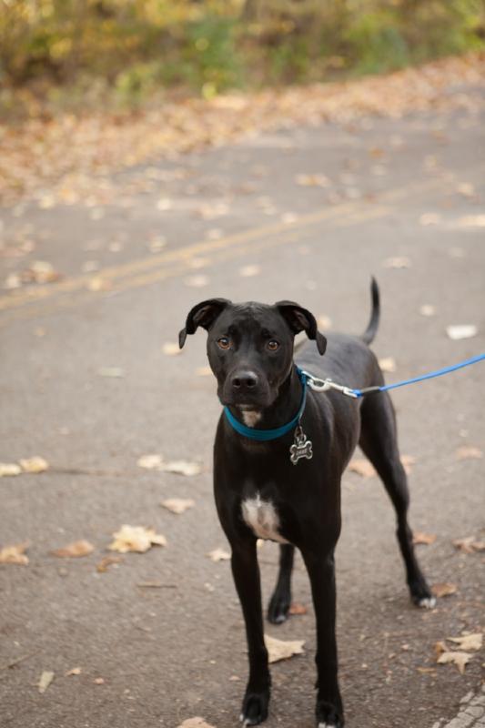 dog-enjoying-walk-lake-radnor.jpg
