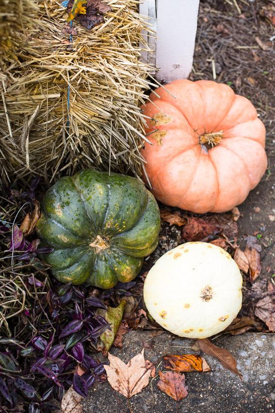 Ellington-agricultural-nashville-fall-engagement-session.jpg-0004.jpg