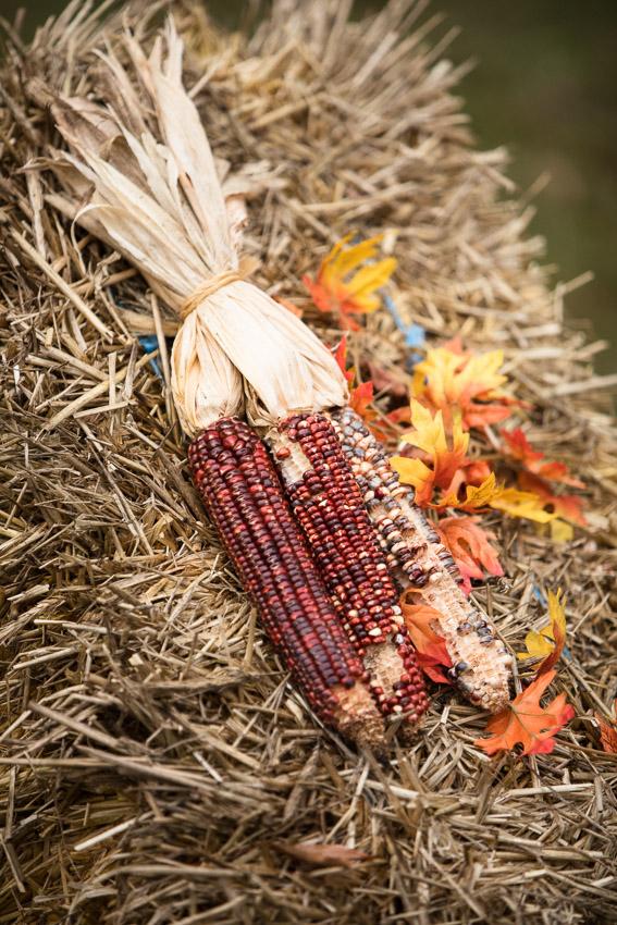 Ellington-agricultural-nashville-fall-engagement-session.jpg-0002.jpg