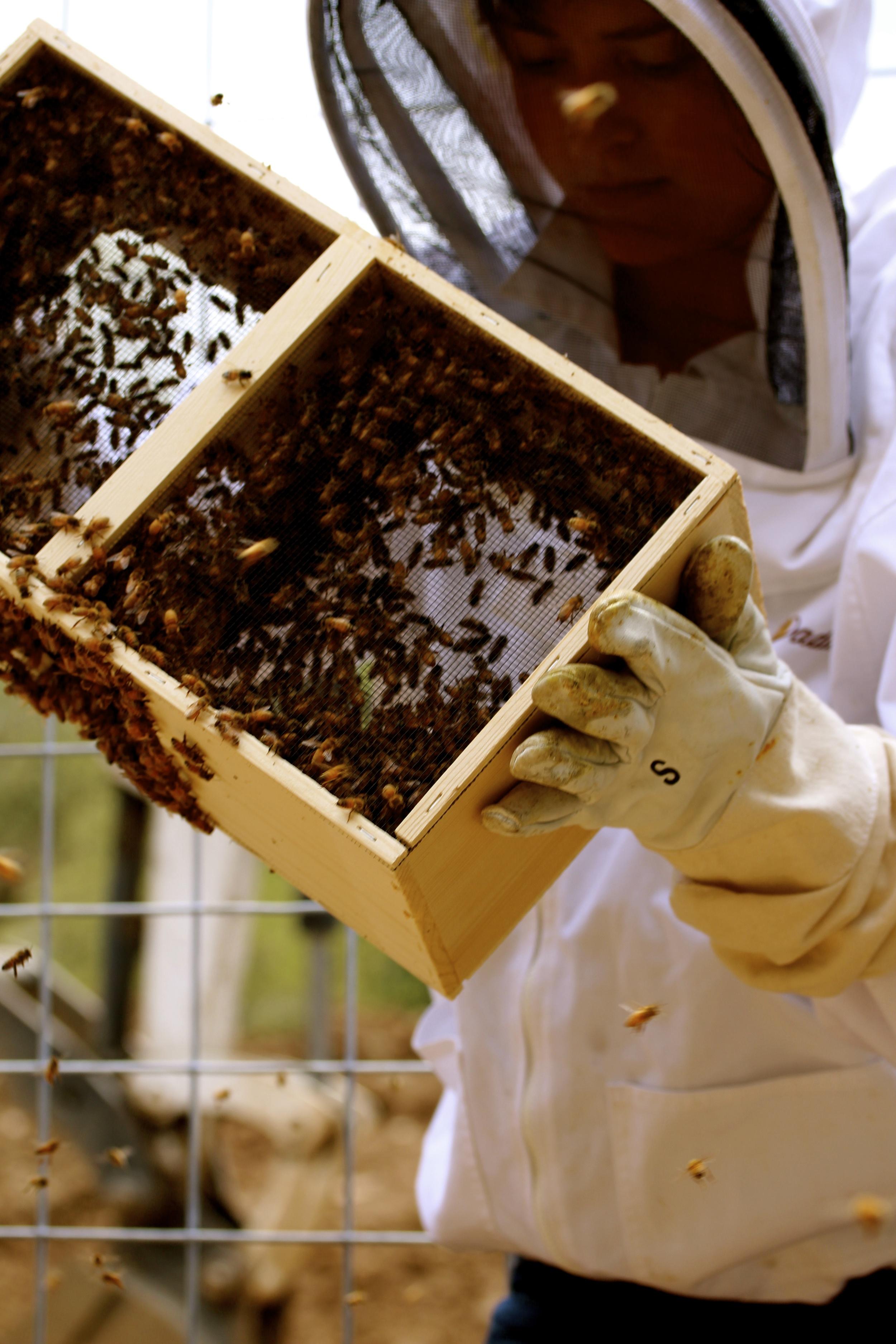 Caitlin Shaking Bees.jpg